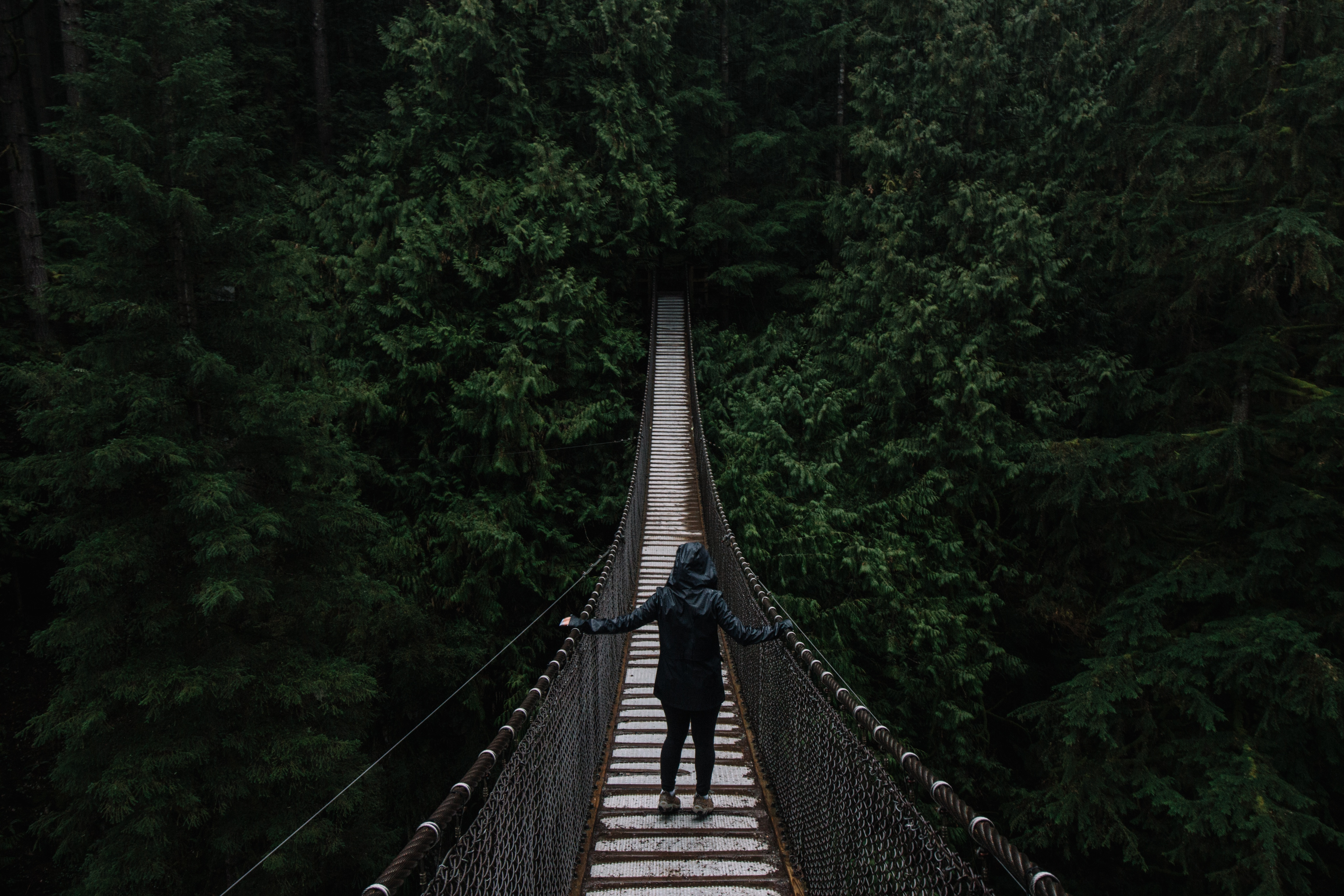 Free wallpaper 82832: Nature, Trees, Bridge, Suspension, Hanging, Human, Person, Loneliness download pictures for cellphone