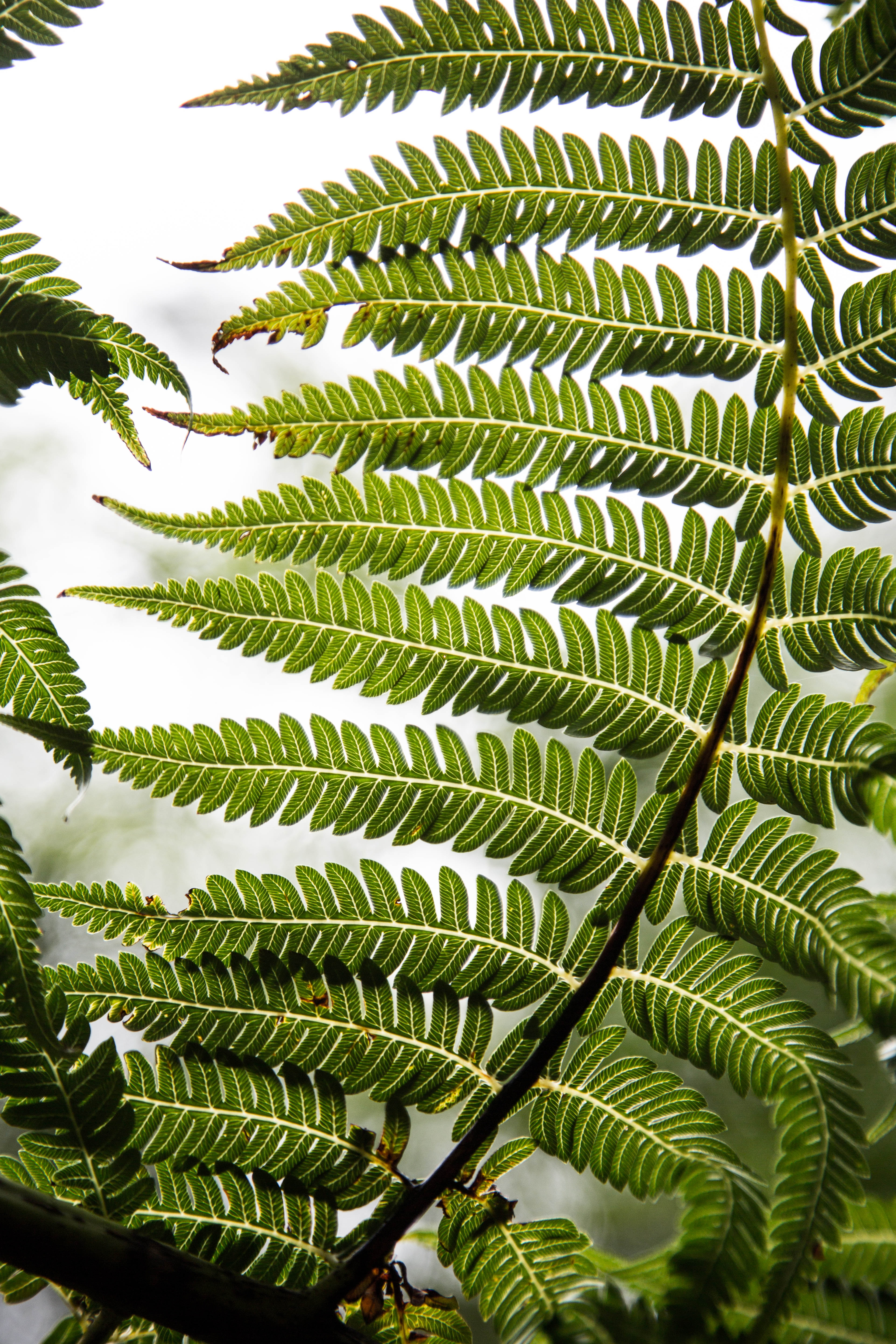 143255 download wallpaper Nature, Plant, Fern, Sheet, Leaf, Carved screensavers and pictures for free