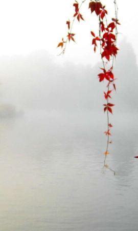 22750 скачать обои Растения, Пейзаж, Река, Листья - заставки и картинки бесплатно