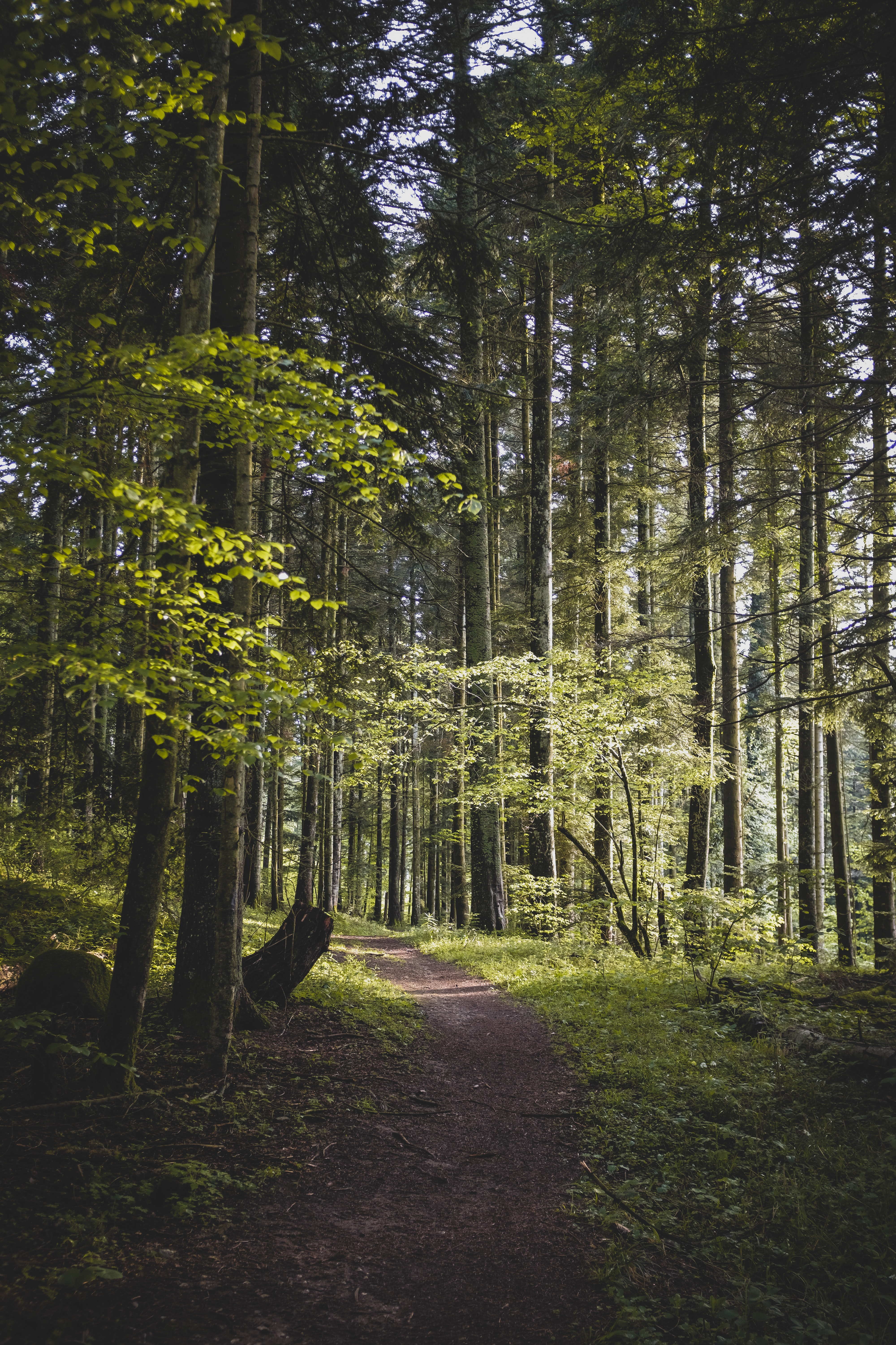 121361 download wallpaper Nature, Forest, Path, Trees, Branches, Leaves screensavers and pictures for free
