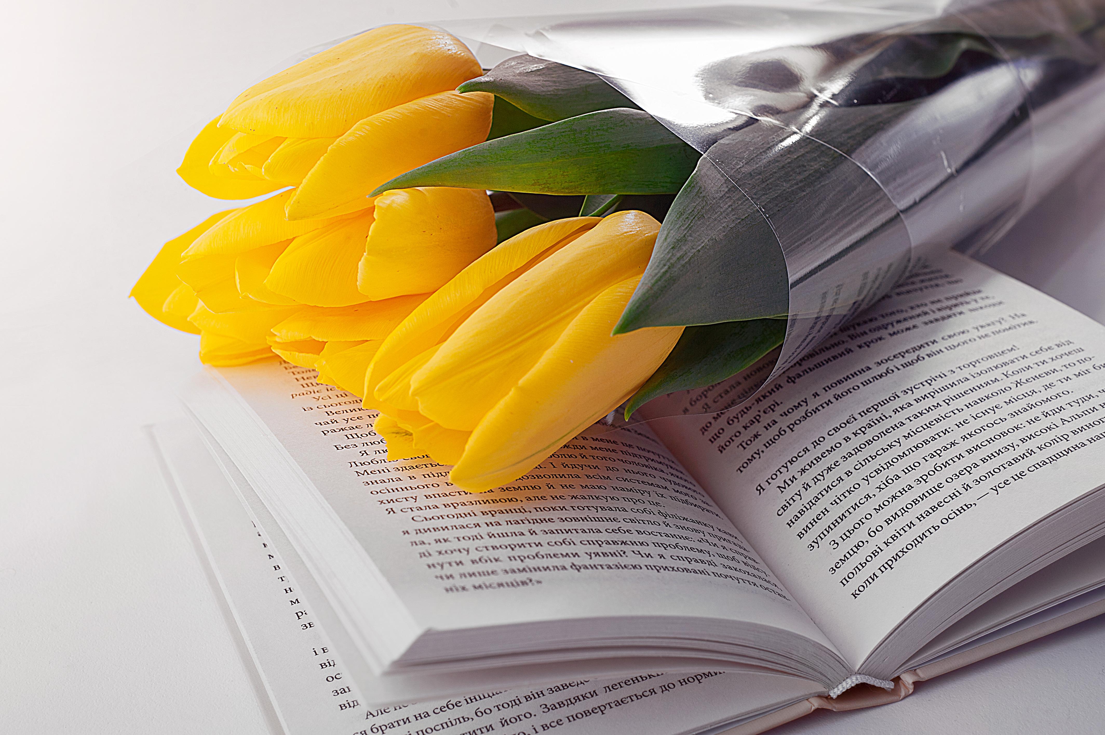94919 скачать обои Цветы, Книга, Букет, Тюльпаны - заставки и картинки бесплатно