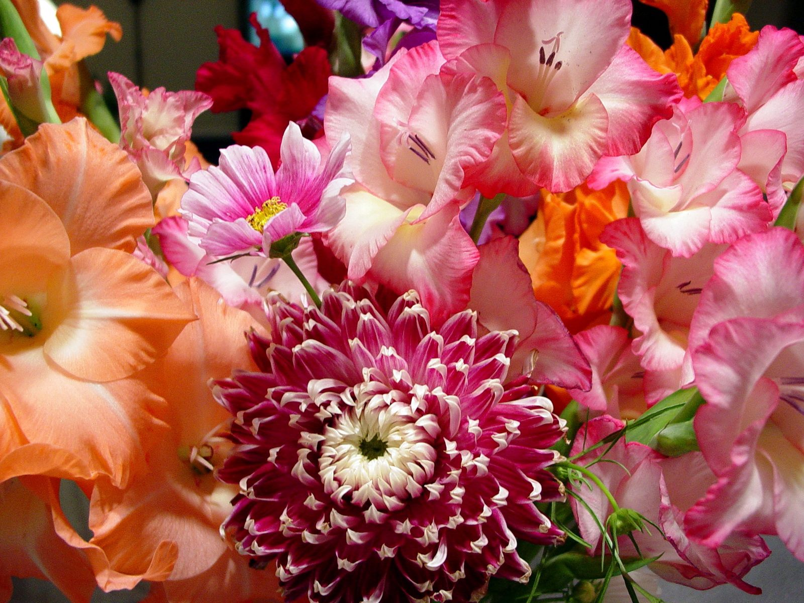 98294 Screensavers and Wallpapers Bouquet for phone. Download Flowers, Bright, Beauty, Bouquet pictures for free