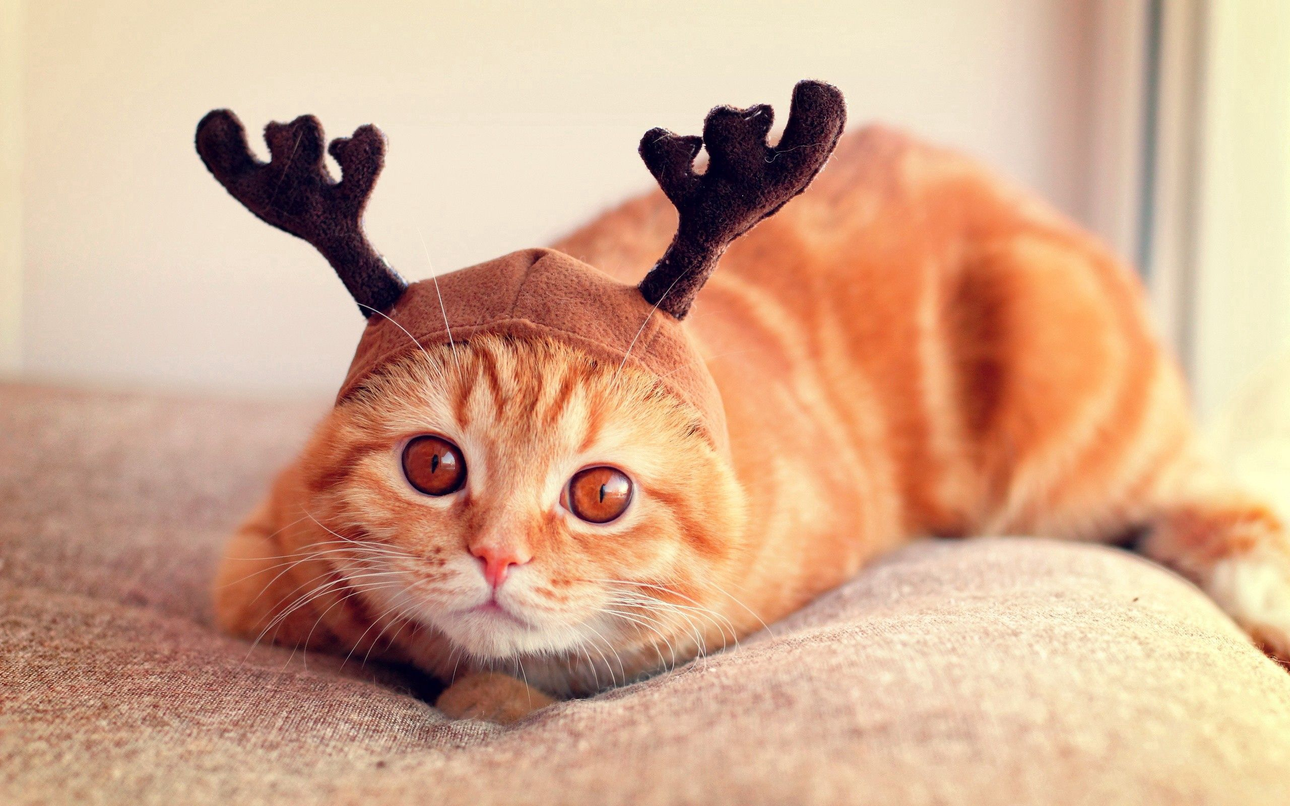 135436 download wallpaper Animals, Cat, Cap, Horns, Cool, To Lie Down, Lie screensavers and pictures for free