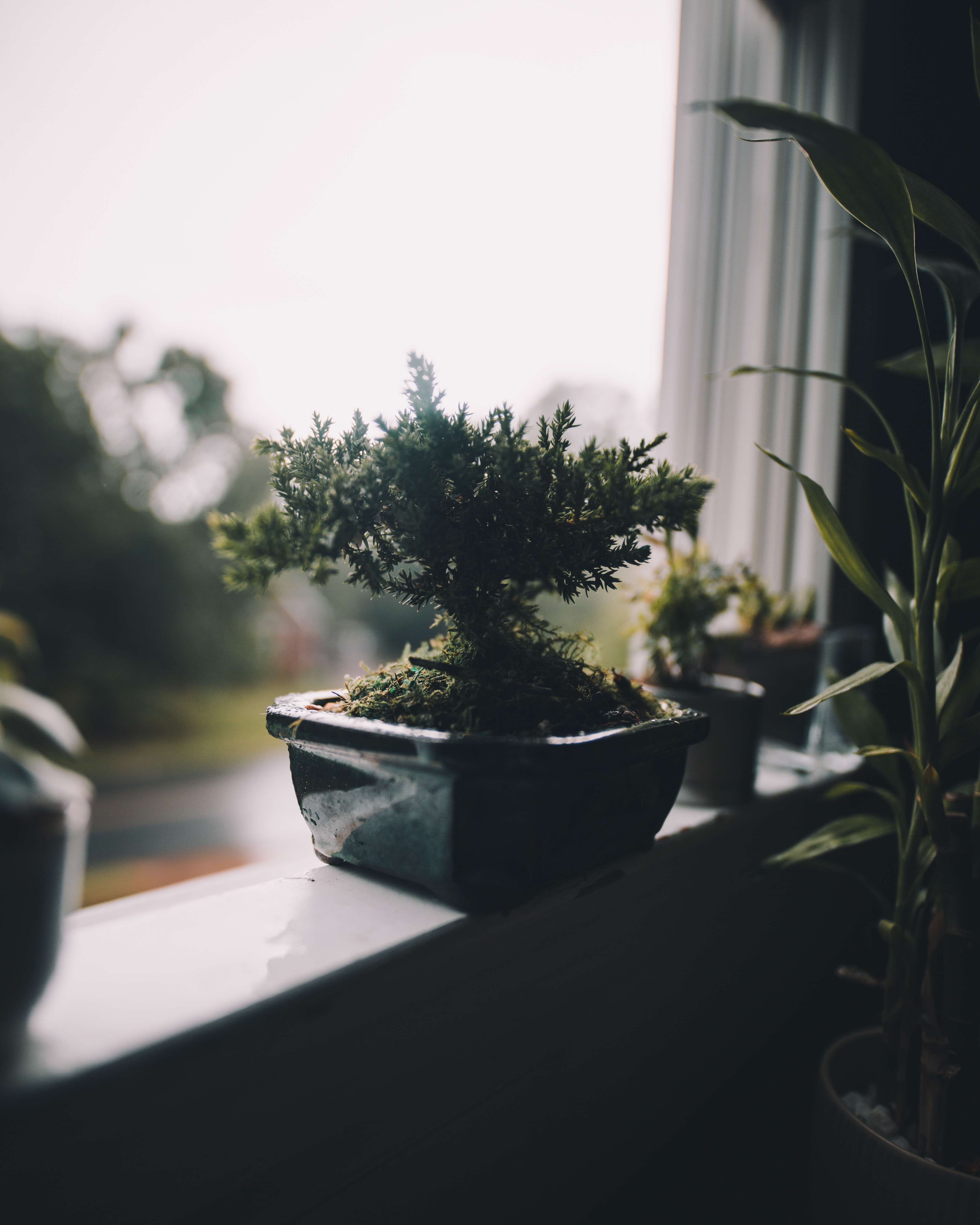 Popular Indoor Plant images for mobile phone