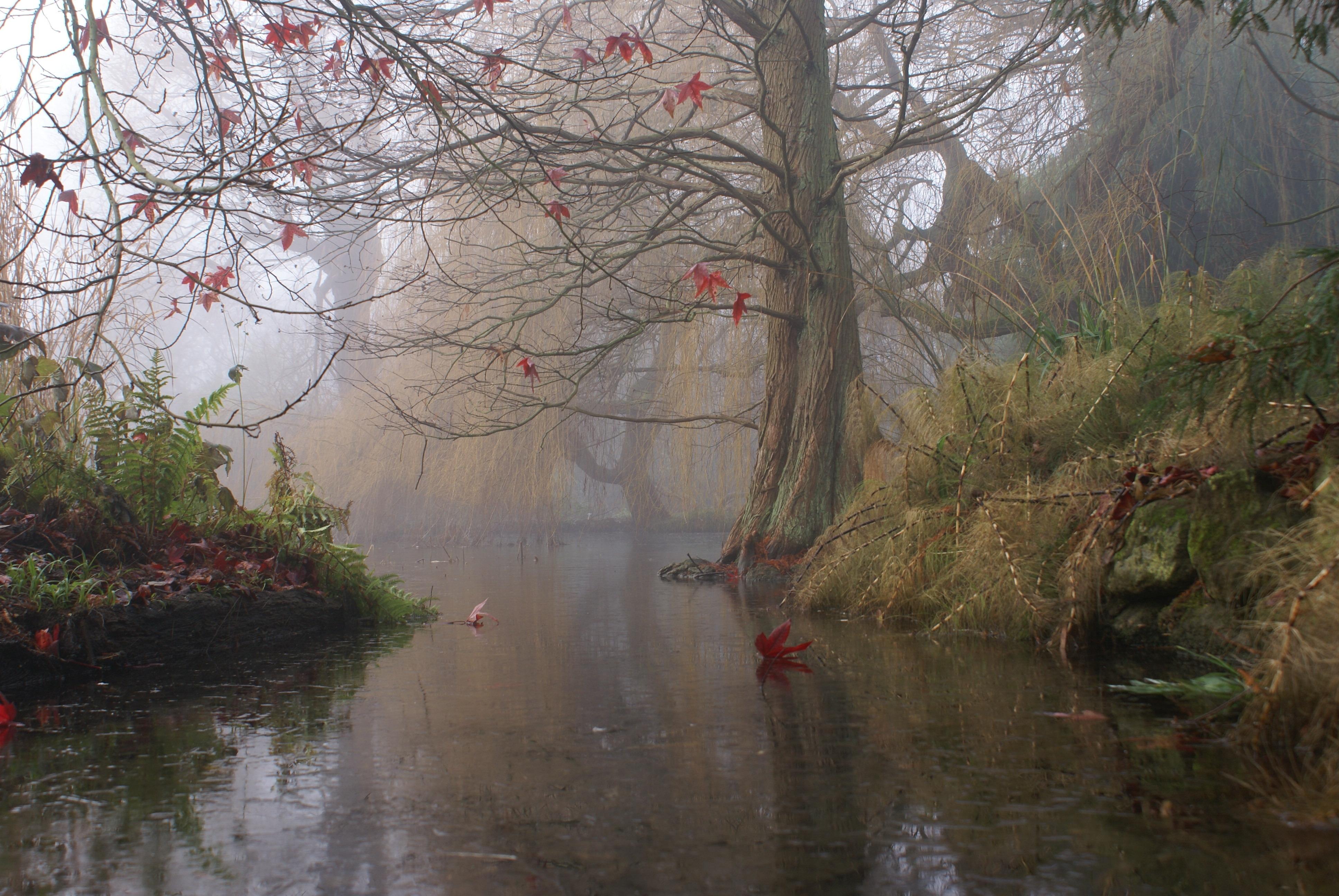 89647 télécharger le fond d'écran Brouillard, Nature, Art, Buissons, Lac, Bois, Arbre, Peinture, Feuille, De L'art - économiseurs d'écran et images gratuitement