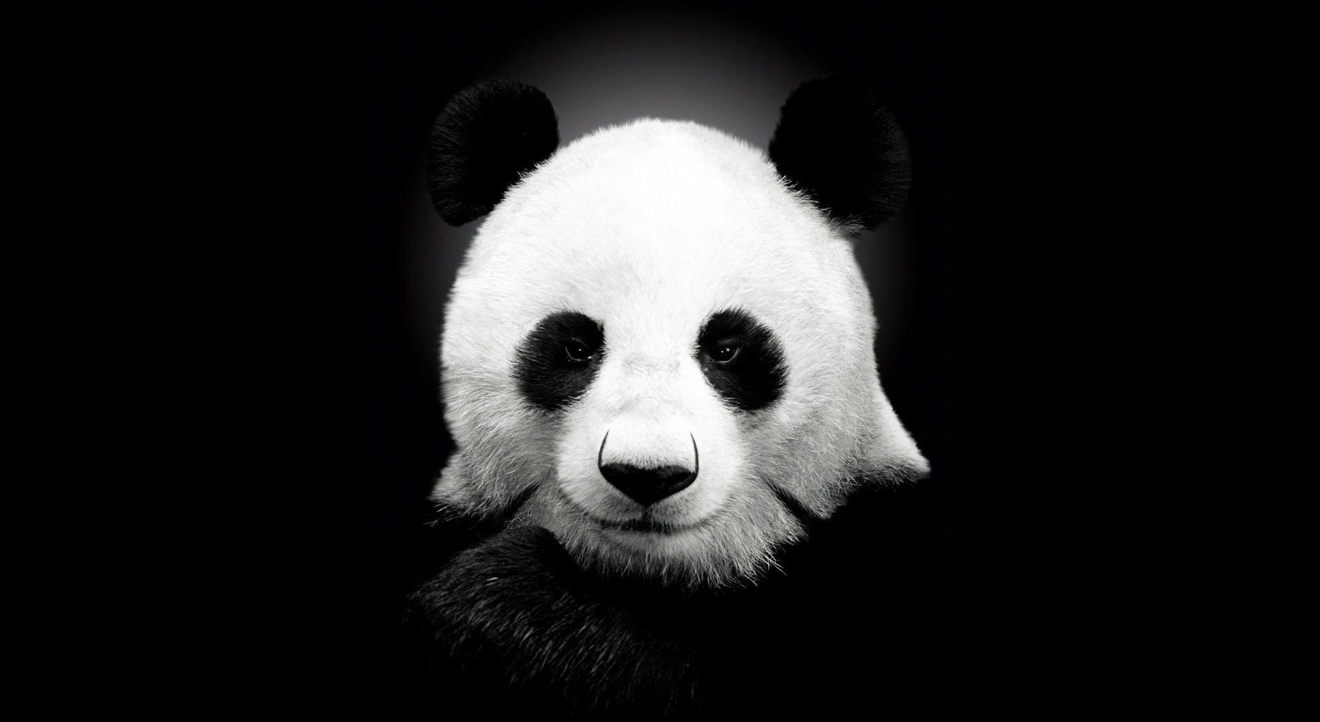 33219 download wallpaper Animals, Pandas screensavers and pictures for free