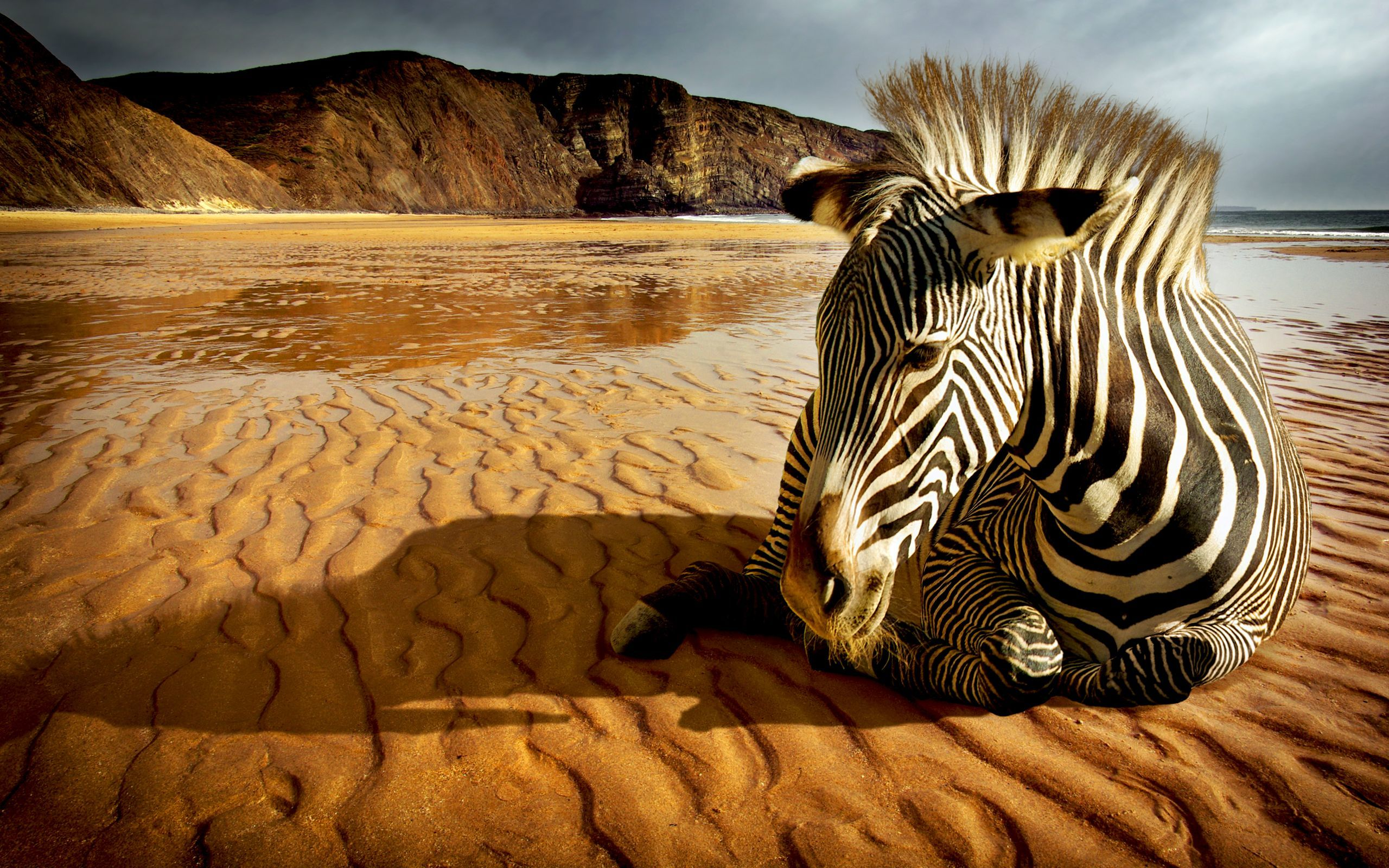 47943 download wallpaper Animals, Landscape, Zebra screensavers and pictures for free
