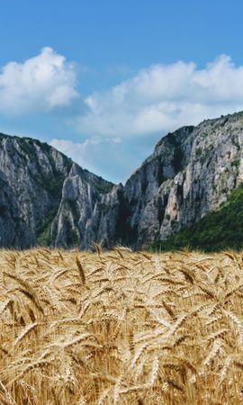 73425 скачать обои Колосья, Поле, Природа, Горы, Пшеница - заставки и картинки бесплатно