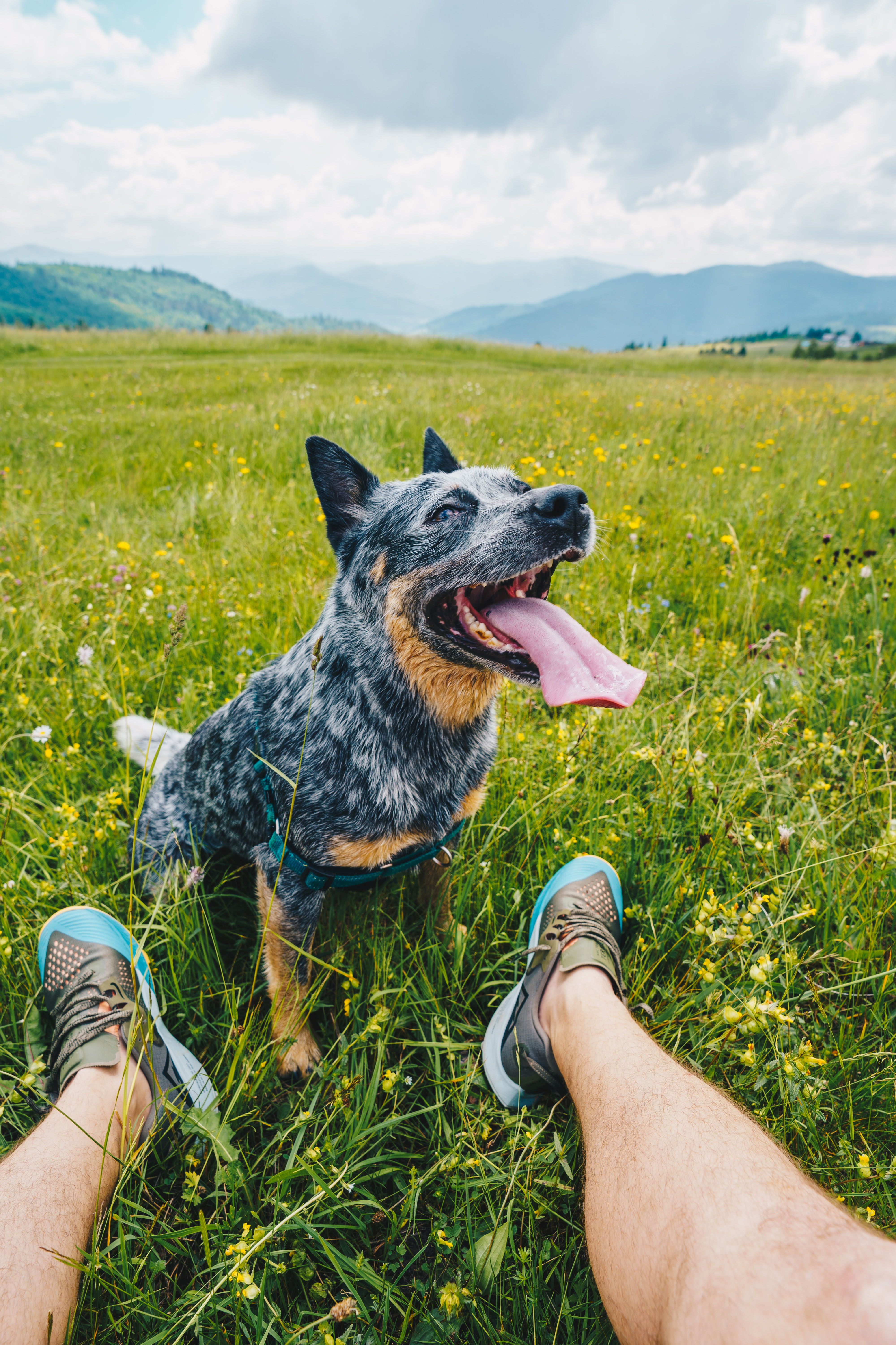 146347 download wallpaper Animals, Dog, Pet, Protruding Tongue, Tongue Stuck Out, Friends, Legs screensavers and pictures for free
