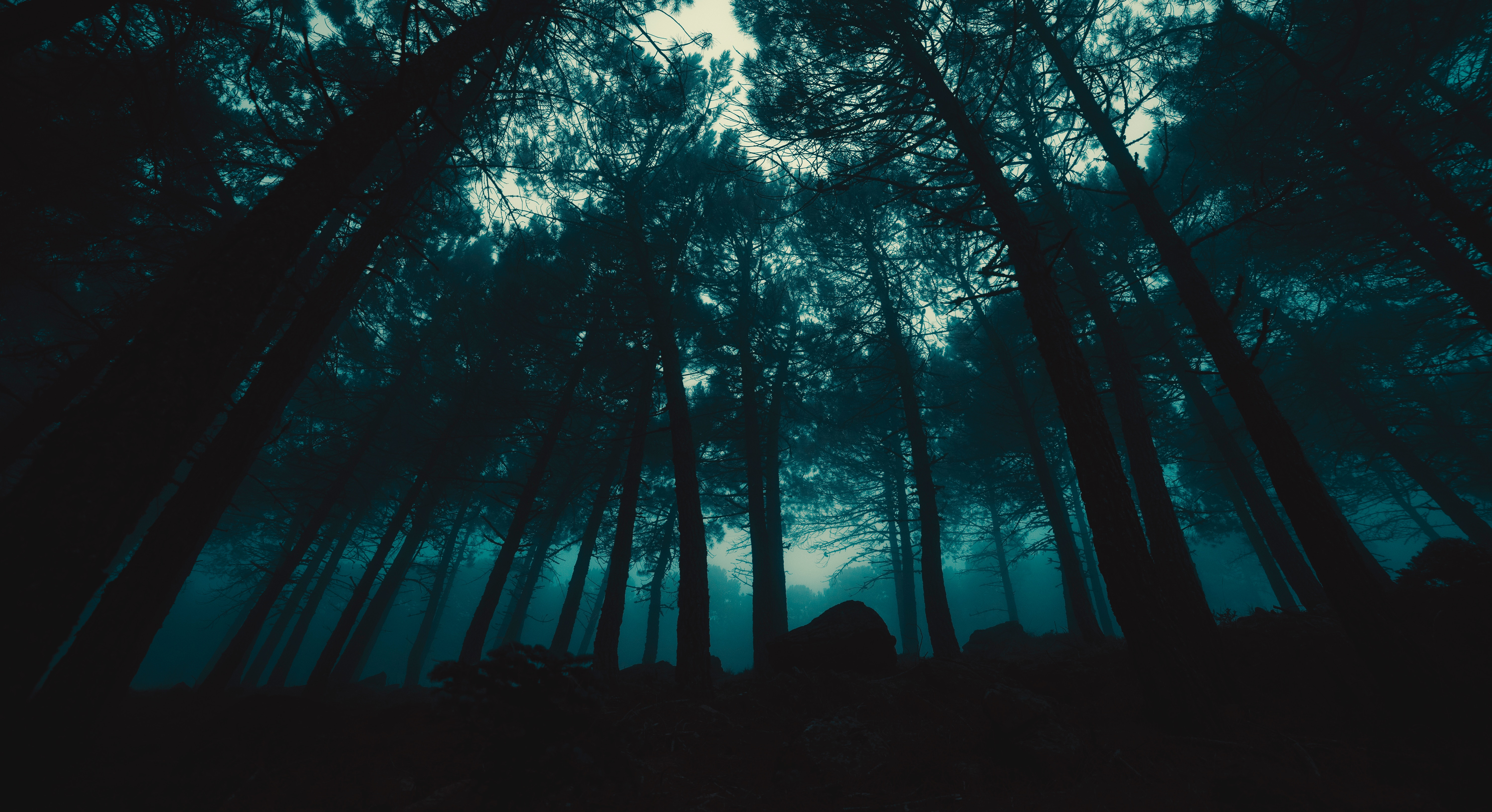 152058 free wallpaper 480x800 for phone, download images Trees, Dark, Forest, Fog, Evening 480x800 for mobile