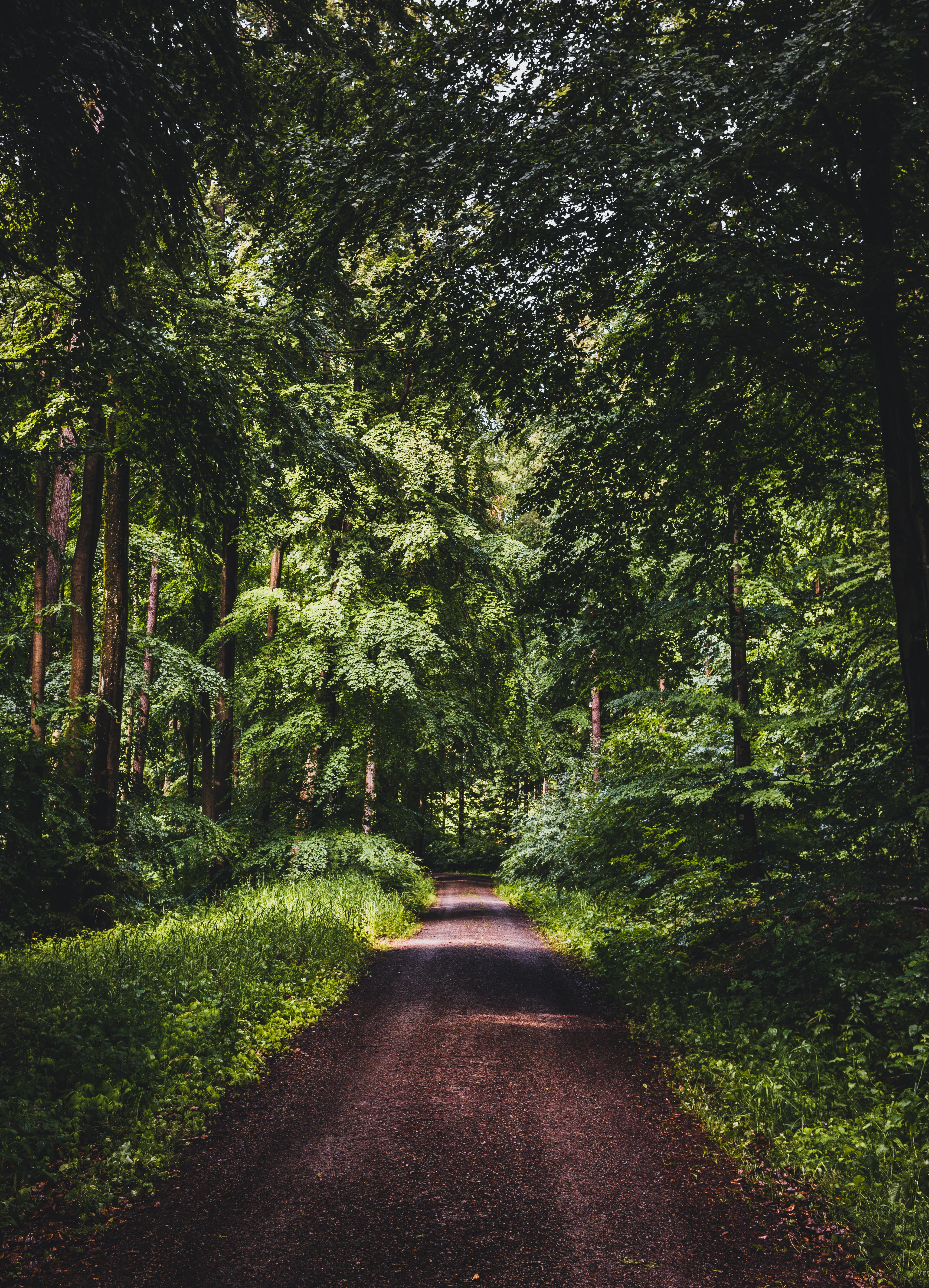 137139 Screensavers and Wallpapers Dahl for phone. Download Nature, Trees, Grass, Road, Forest, Dahl, Distance pictures for free