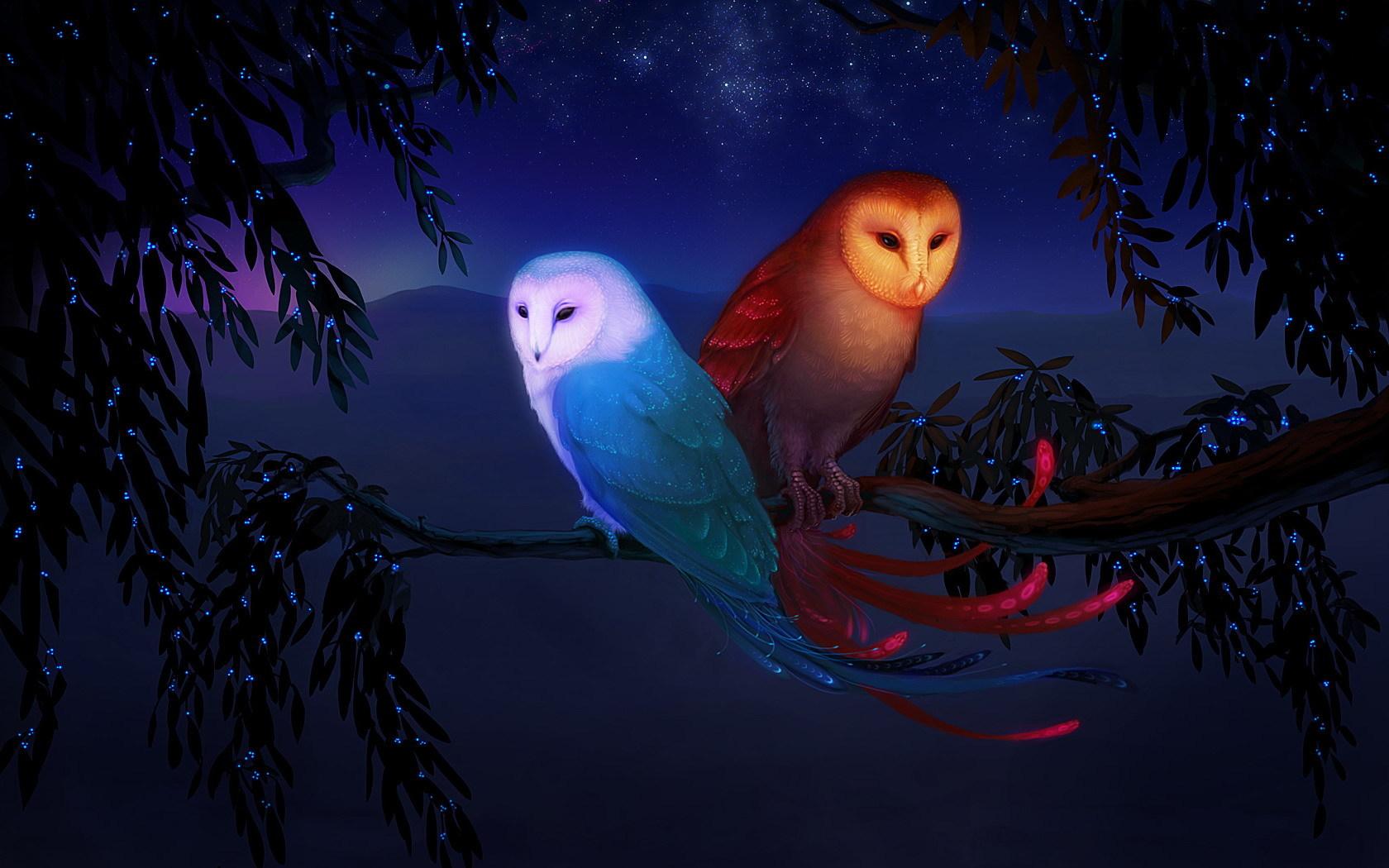 43950 baixar papel de parede Imagens, Animais, Aves - protetores de tela e imagens gratuitamente