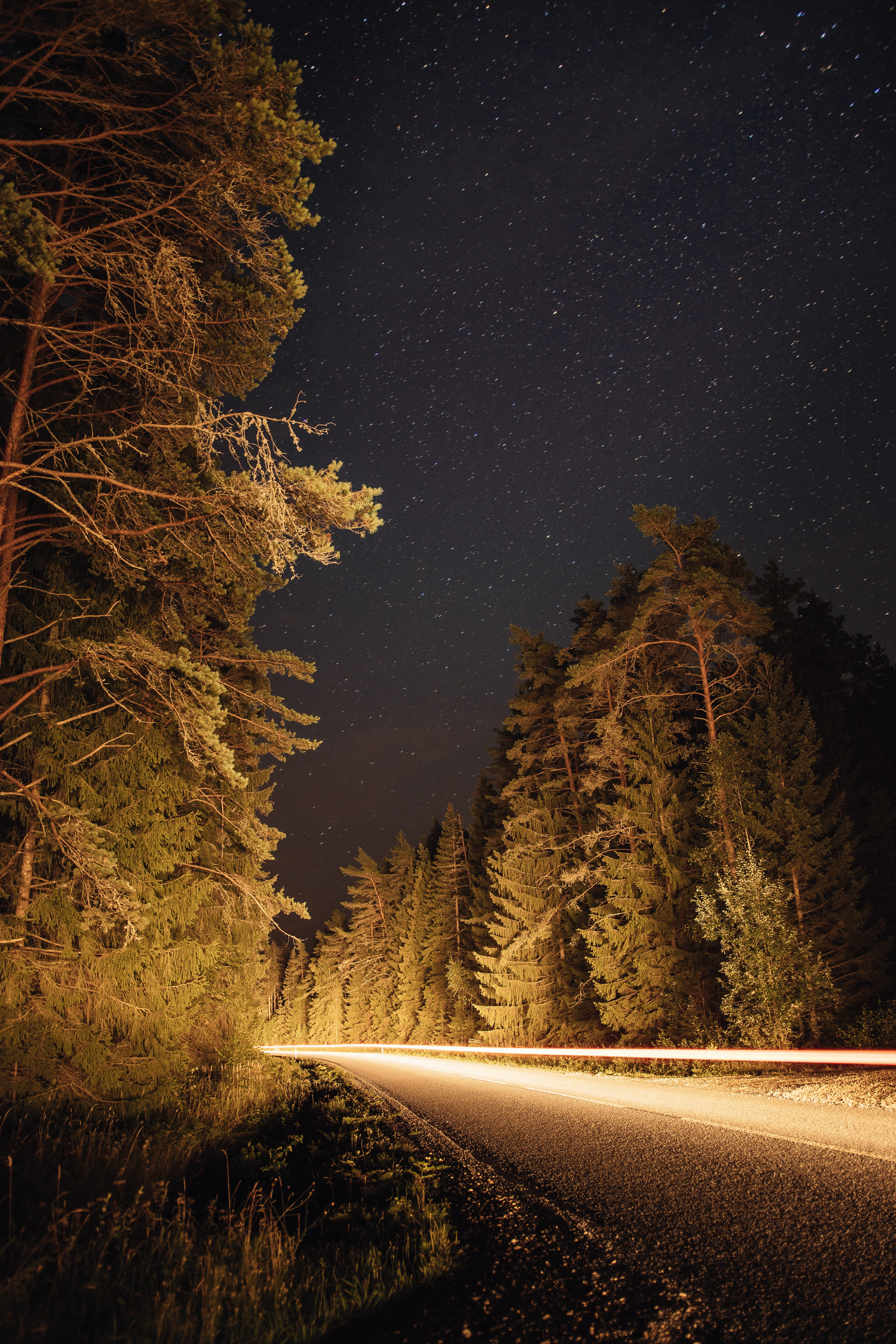 115430 Screensavers and Wallpapers Spruce for phone. Download Nature, Trees, Road, Long Exposure, Spruce, Fir pictures for free