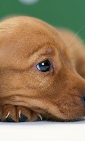 40192 baixar papel de parede Animais, Cães - protetores de tela e imagens gratuitamente