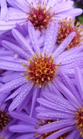 251 скачать обои Растения, Цветы - заставки и картинки бесплатно