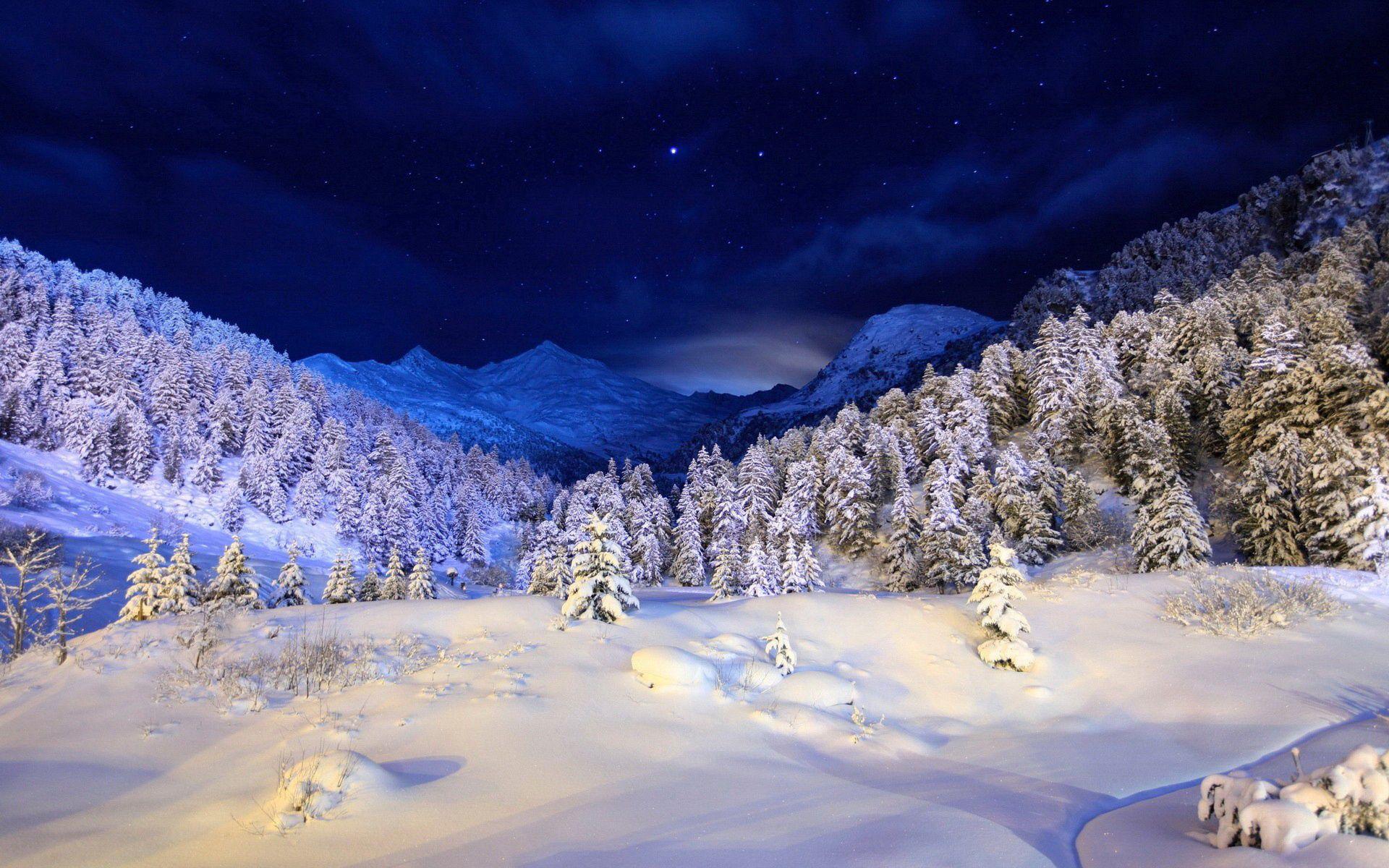 130994 скачать обои Снег, Зима, Природа, Деревья, Звезды, Ночь, Хвойные, Свет, Синий, Белый, Покров - заставки и картинки бесплатно