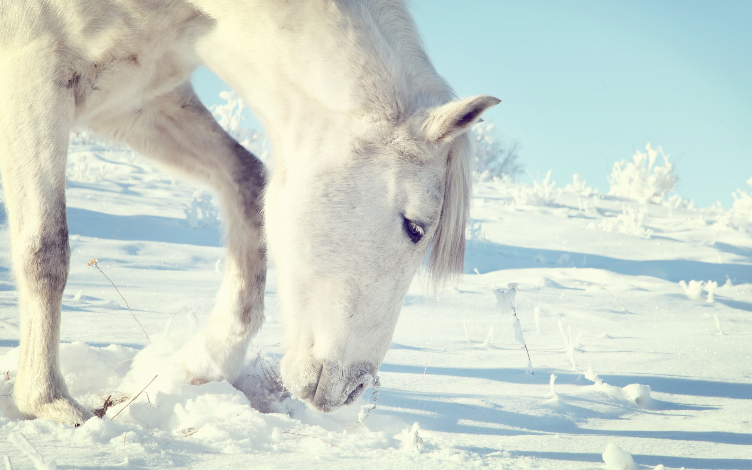 47650 download wallpaper Animals, Horses screensavers and pictures for free