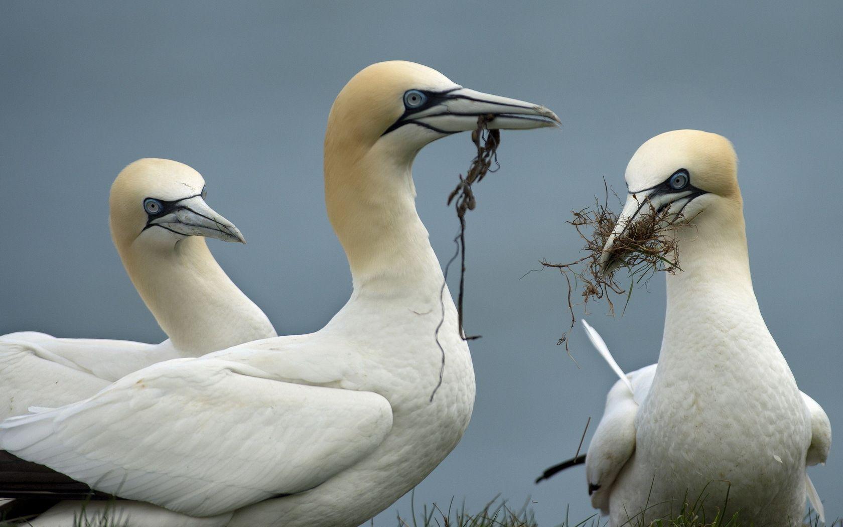 131107 скачать обои Животные, Природа, Фон, Птицы - заставки и картинки бесплатно