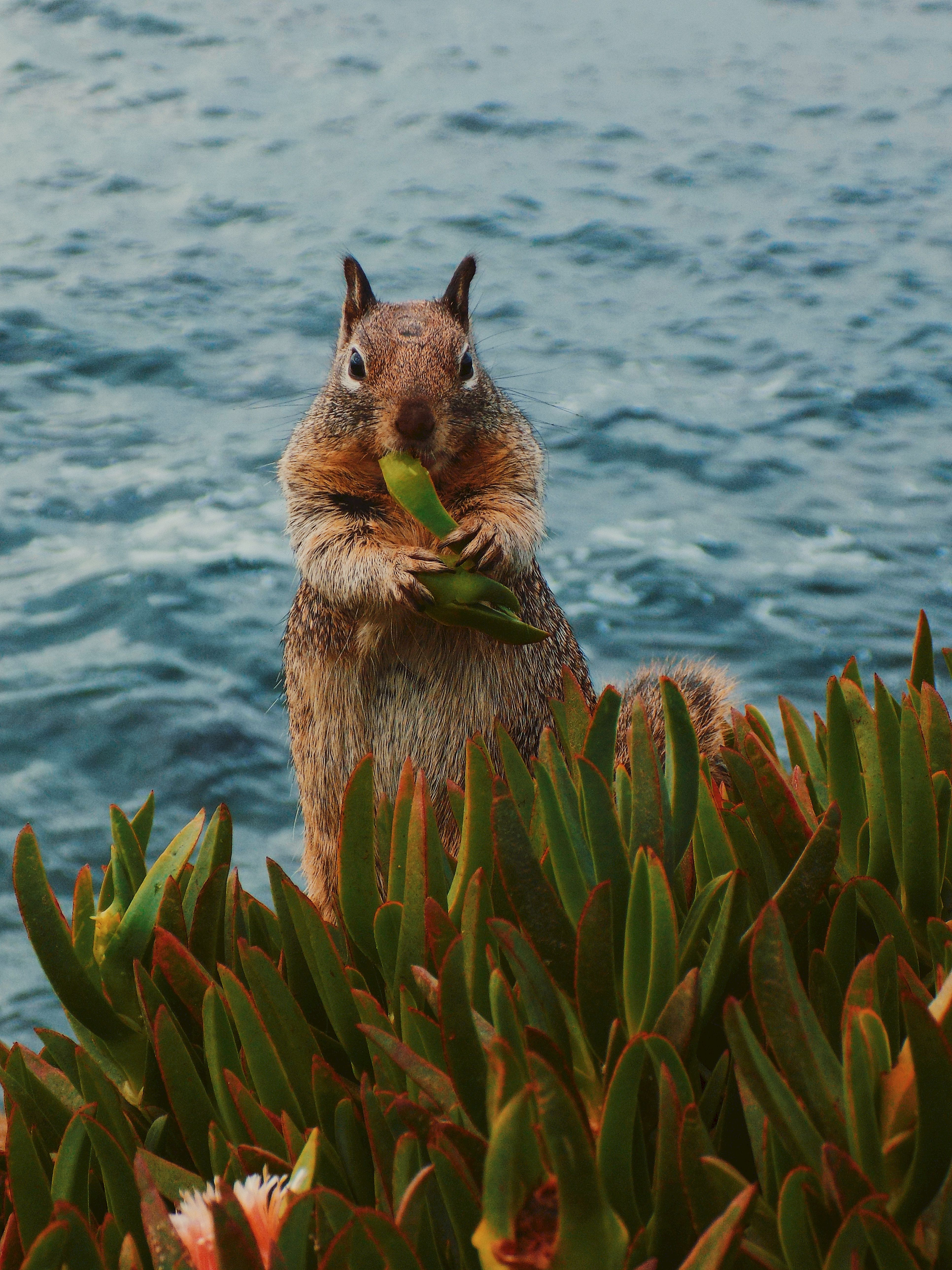 156459 download wallpaper Animals, Squirrel, Leaves, Animal, Wildlife, Food screensavers and pictures for free
