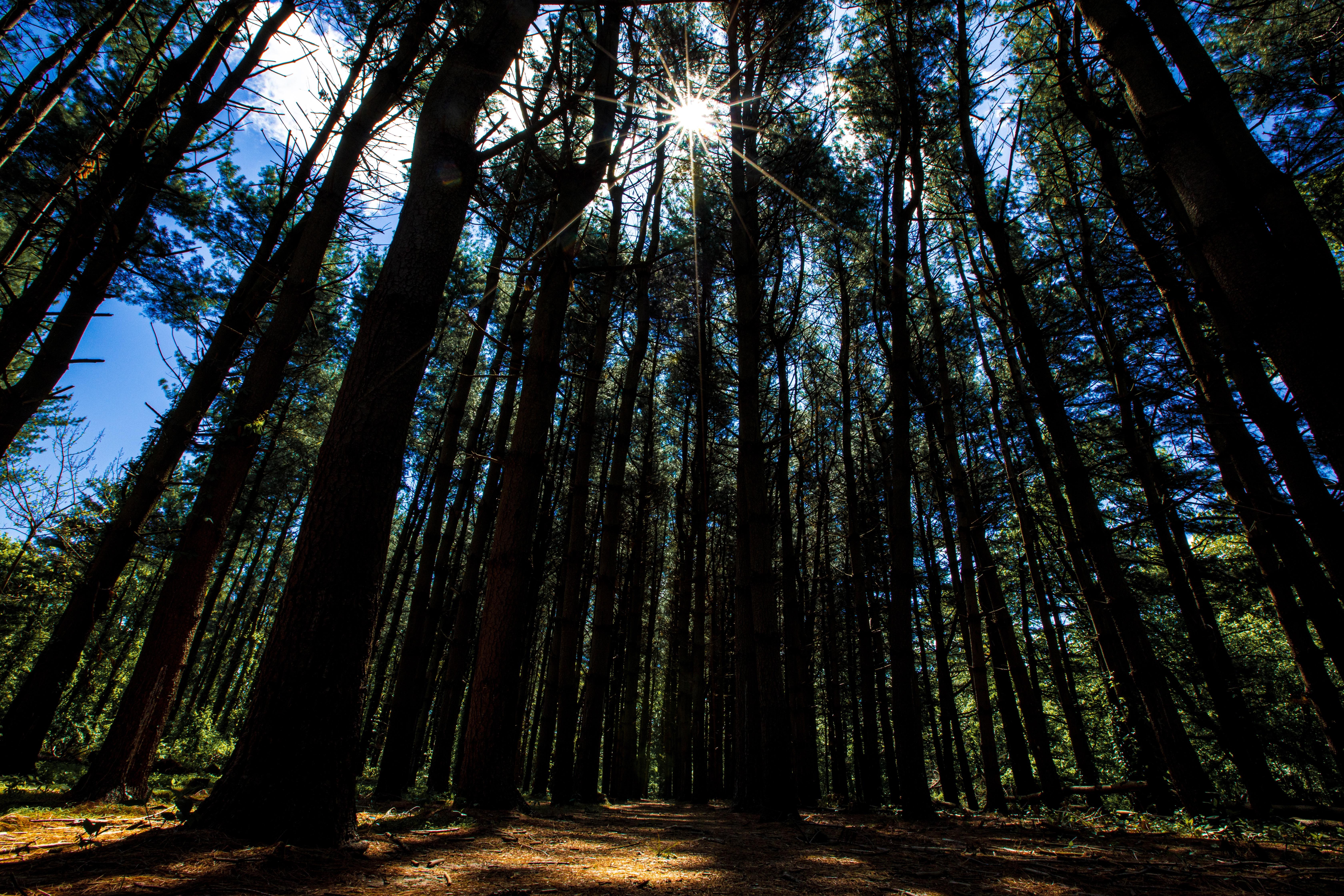 62429壁紙のダウンロード自然, 森林, 森, 木, ビーム, 光線, 日光, 散歩-スクリーンセーバーと写真を無料で