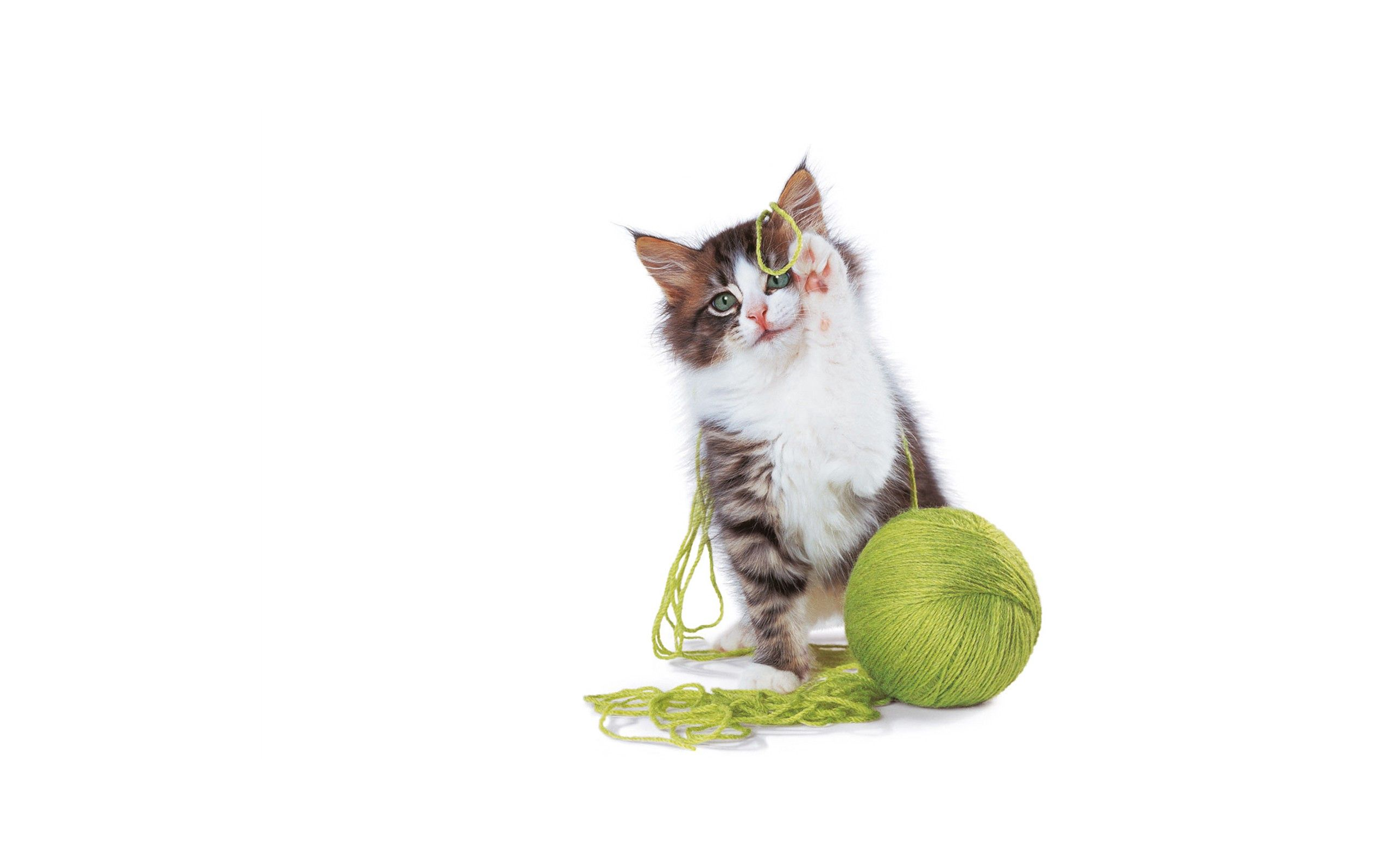 53892 download wallpaper Animals, Kitty, Kitten, Clew, Playful, Paws, Nice, Sweetheart screensavers and pictures for free