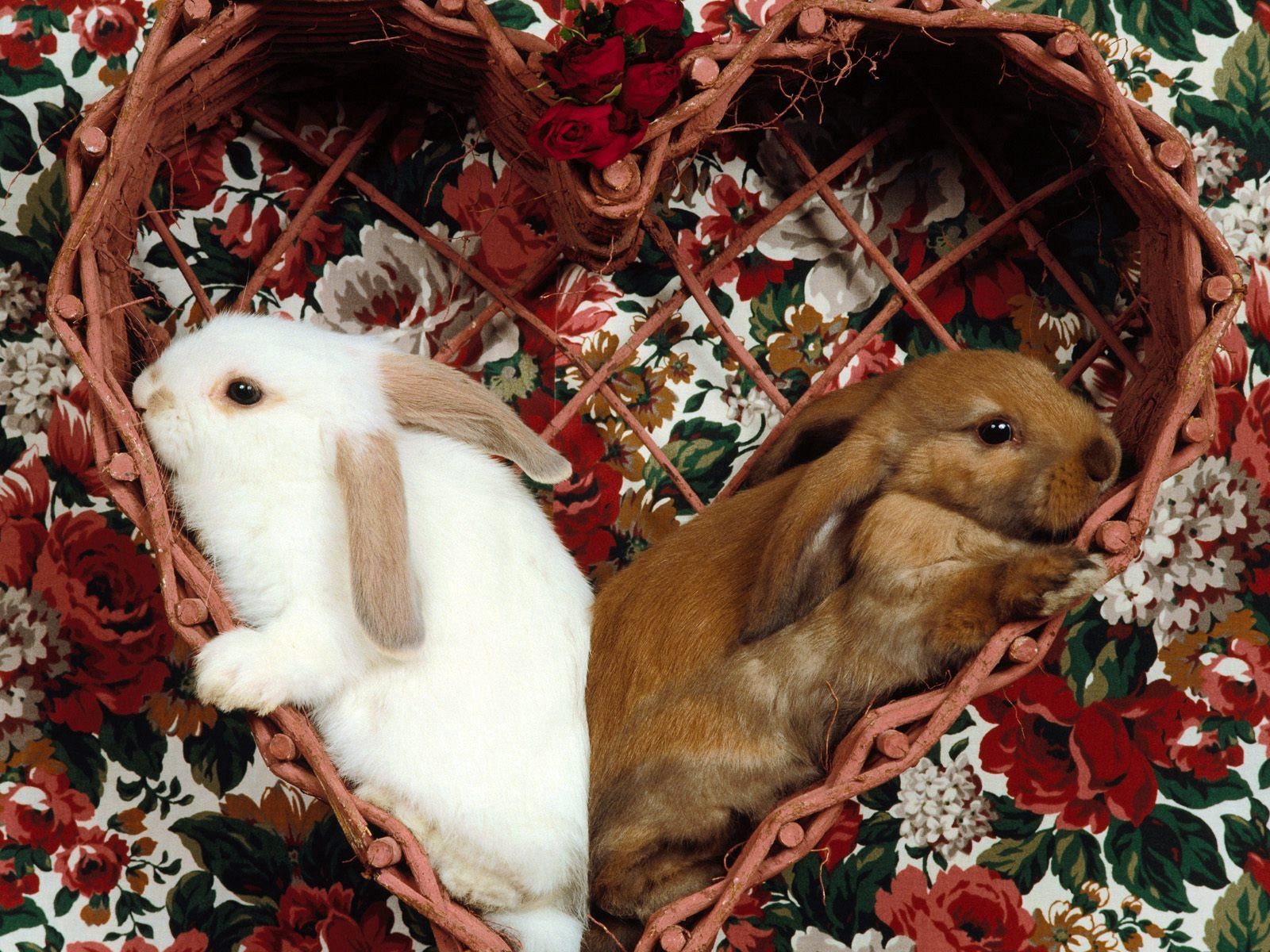 135047 download wallpaper Animals, Rabbits, Sit, Couple, Pair, Ears screensavers and pictures for free
