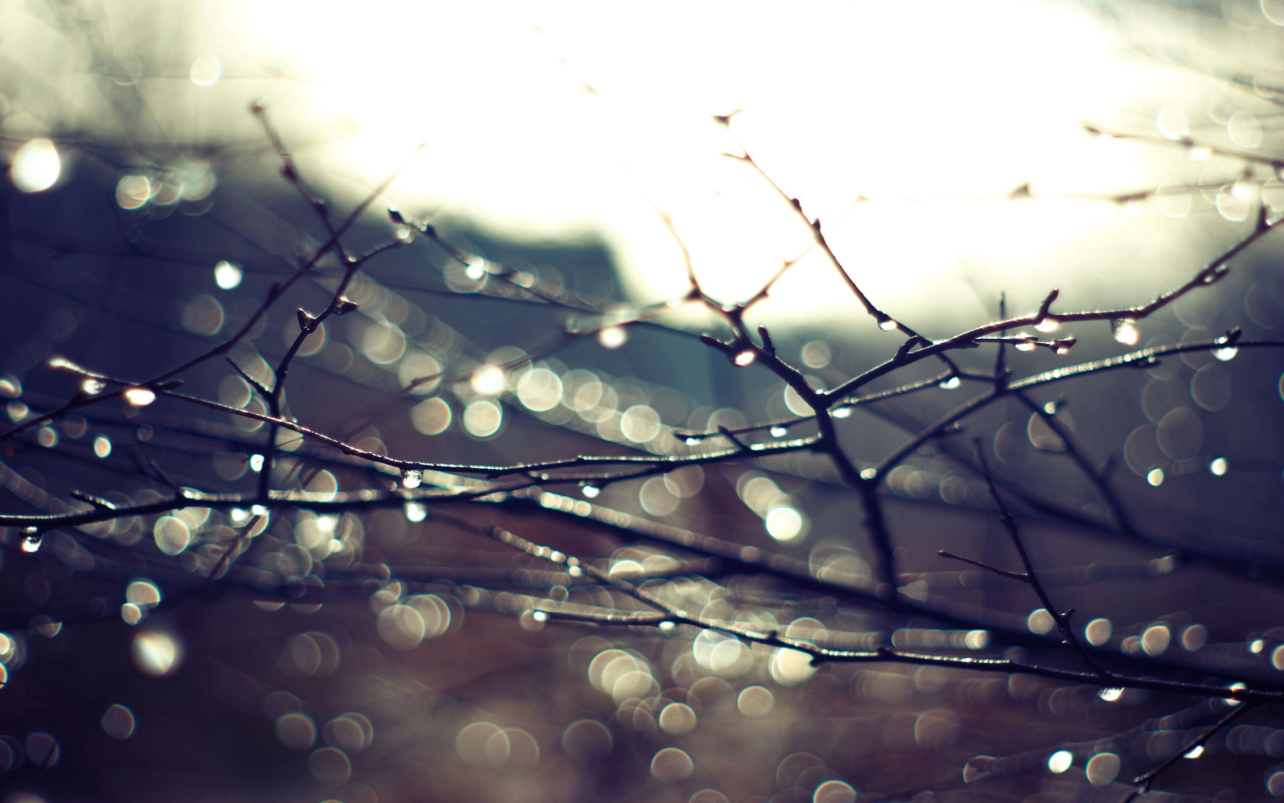 120444 download wallpaper Macro, Branches, Drops, Plant, Sky screensavers and pictures for free
