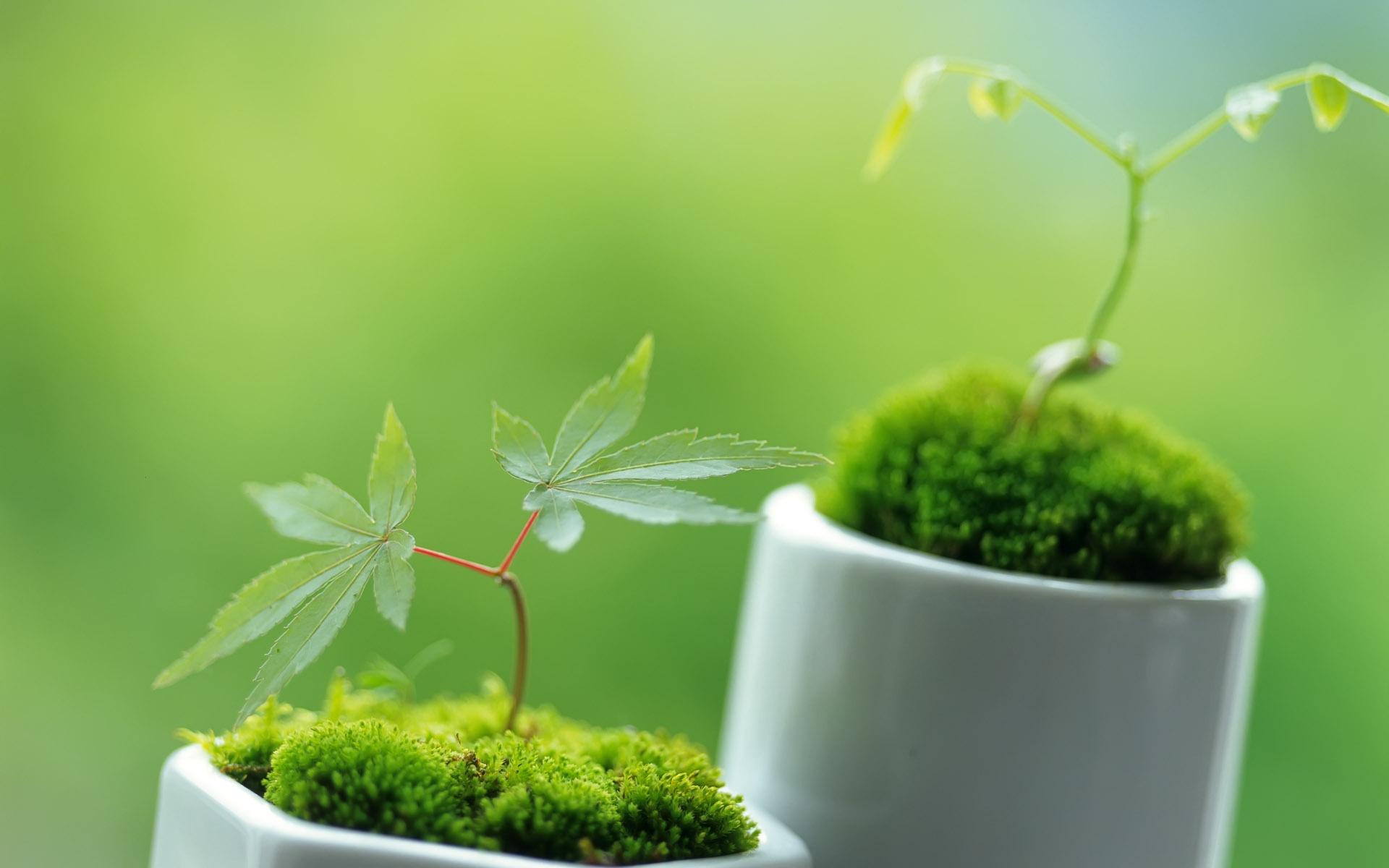 32075 скачать обои Растения, Конопля (Cannabis) - заставки и картинки бесплатно
