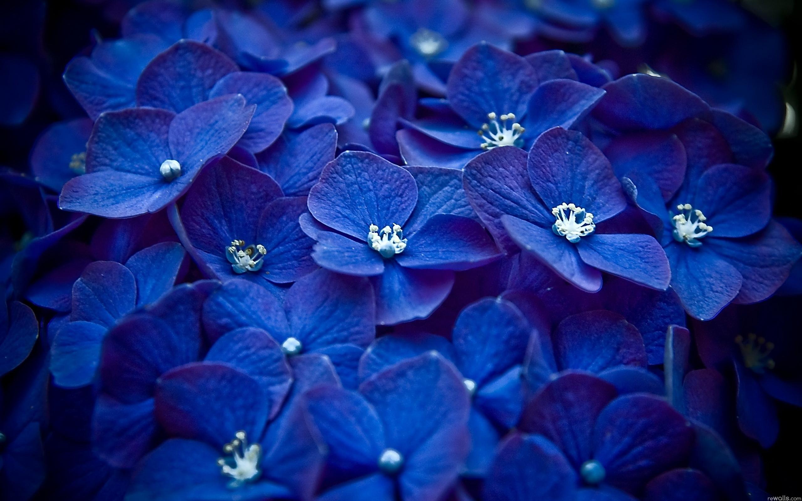 49549 скачать обои Растения, Цветы, Фиалки - заставки и картинки бесплатно
