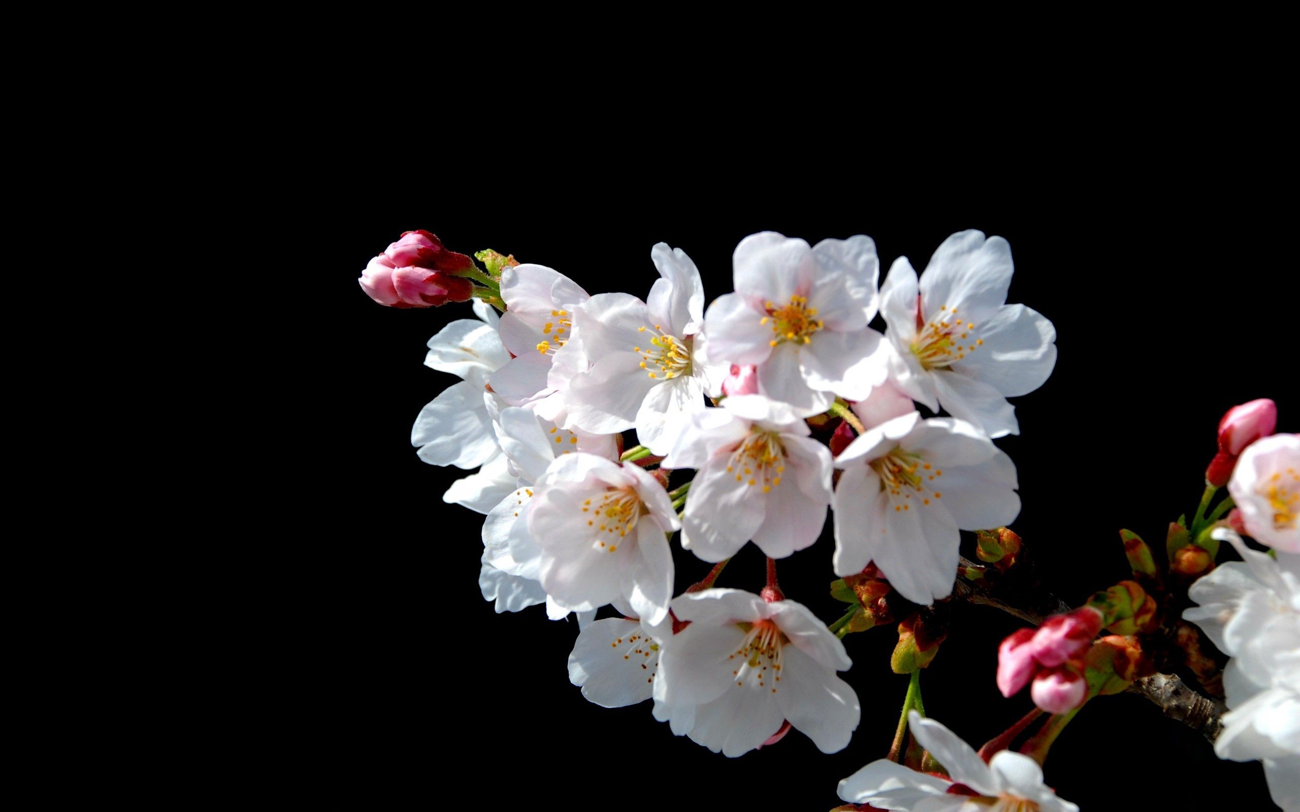 128978 Screensavers and Wallpapers Bloom for phone. Download Flowers, Macro, Bloom, Flowering, Branch, Spring pictures for free