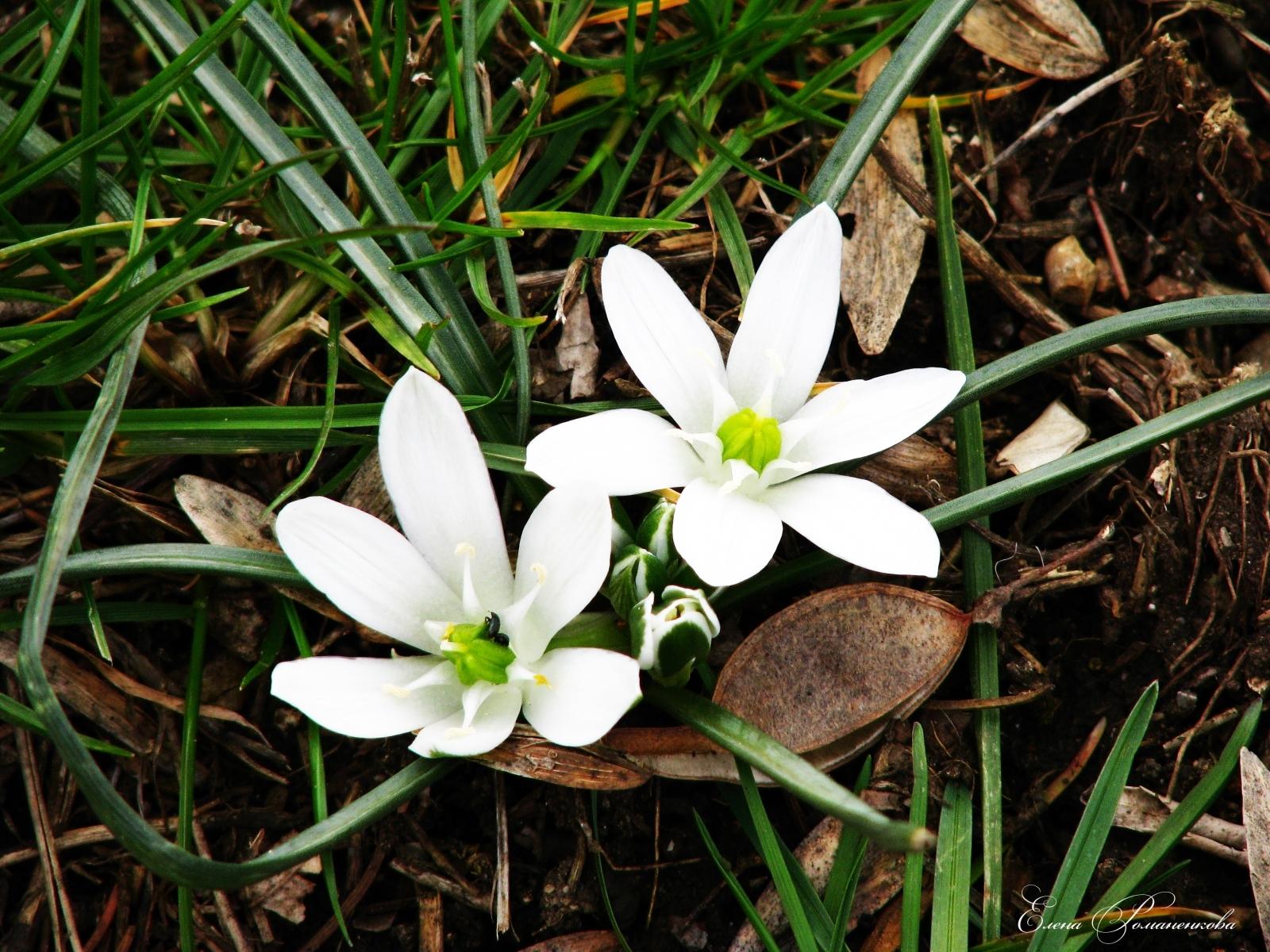 4213 скачать обои Растения, Цветы - заставки и картинки бесплатно