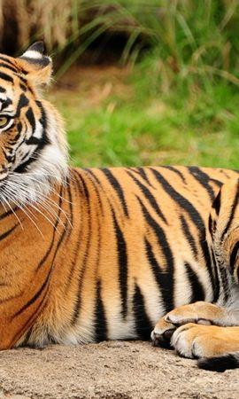 31248壁紙のダウンロード動物, 阪神タイガース, オレンジ-スクリーンセーバーと写真を無料で