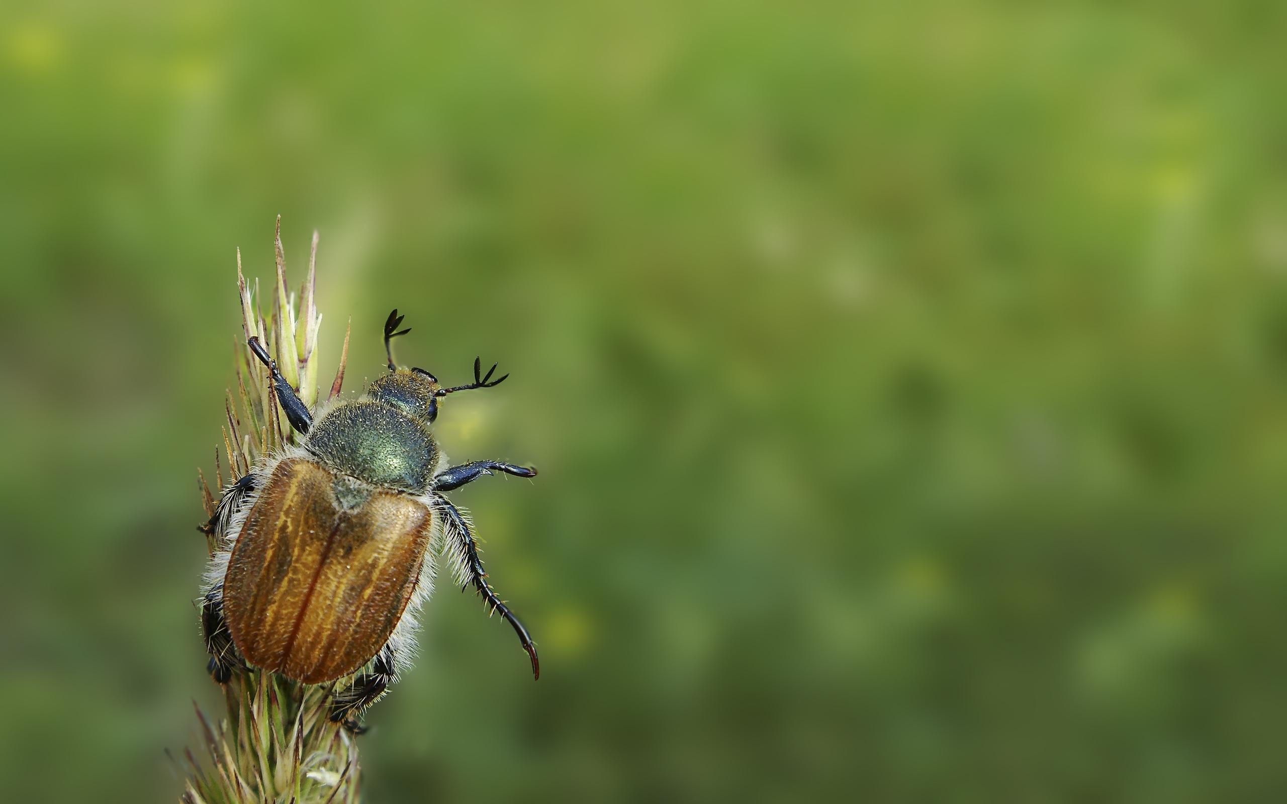 42401 descargar fondo de pantalla Insectos: protectores de pantalla e imágenes gratis