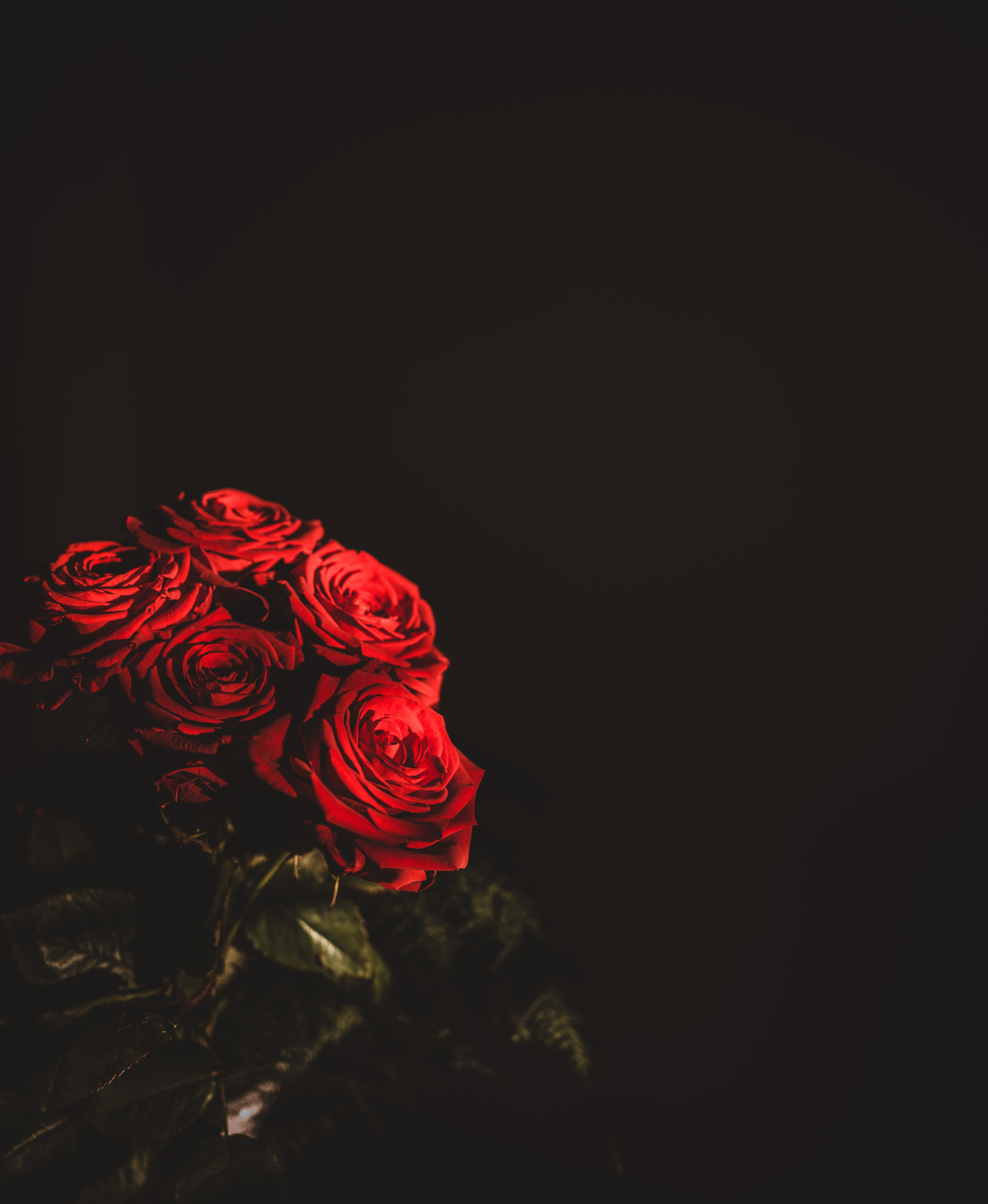 87870 Screensavers and Wallpapers Bouquet for phone. Download Flowers, Roses, Dark, Bouquet pictures for free