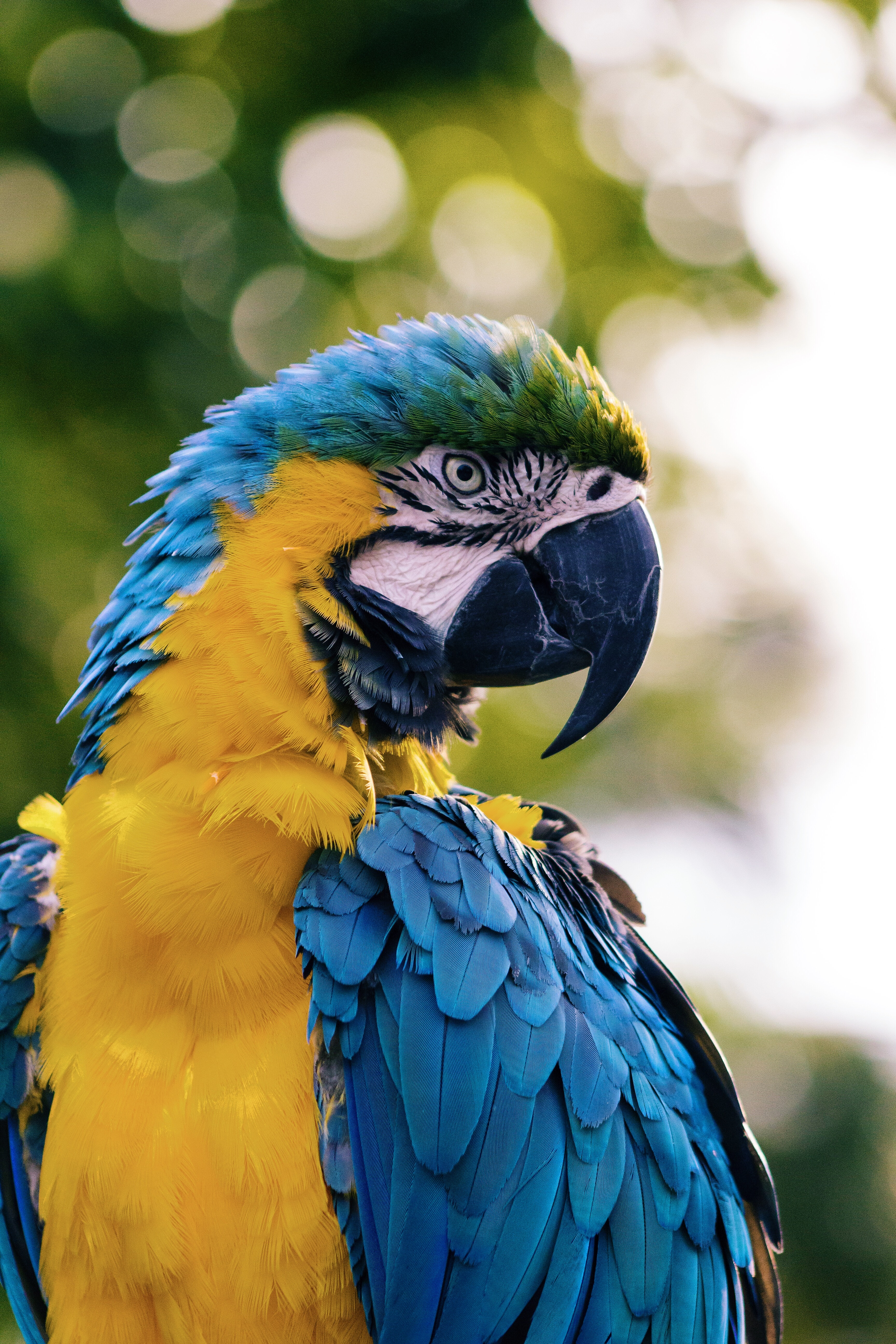 113187 Screensavers and Wallpapers Color for phone. Download Animals, Parrots, Bird, Color, Macaw pictures for free