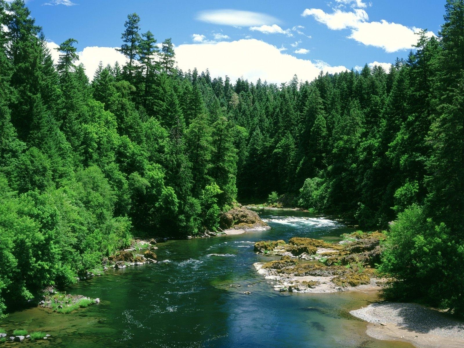 915 скачать обои Пейзаж, Река, Деревья - заставки и картинки бесплатно