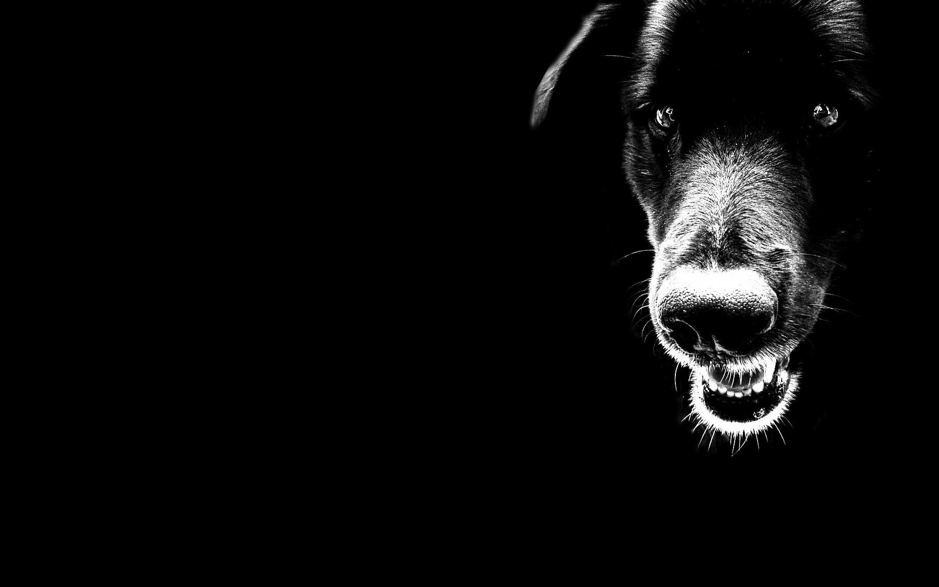 23847 скачать обои Животные, Собаки - заставки и картинки бесплатно