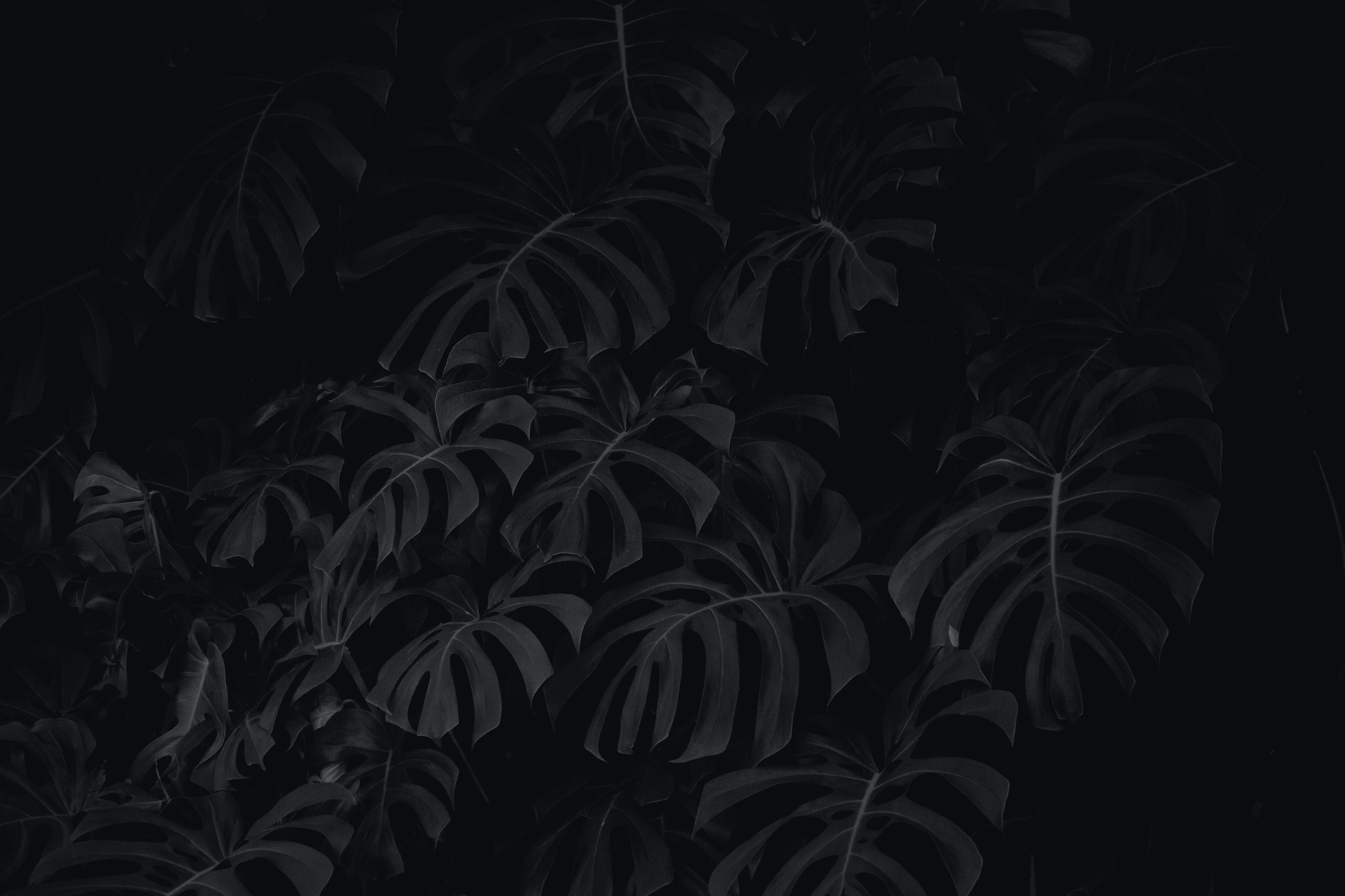 106132 descarga Negro fondos de pantalla para tu teléfono gratis, Hojas, Planta, Bw, Chb Negro imágenes y protectores de pantalla para tu teléfono