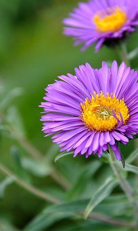 44693 télécharger le fond d'écran Plantes, Fleurs - économiseurs d'écran et images gratuitement