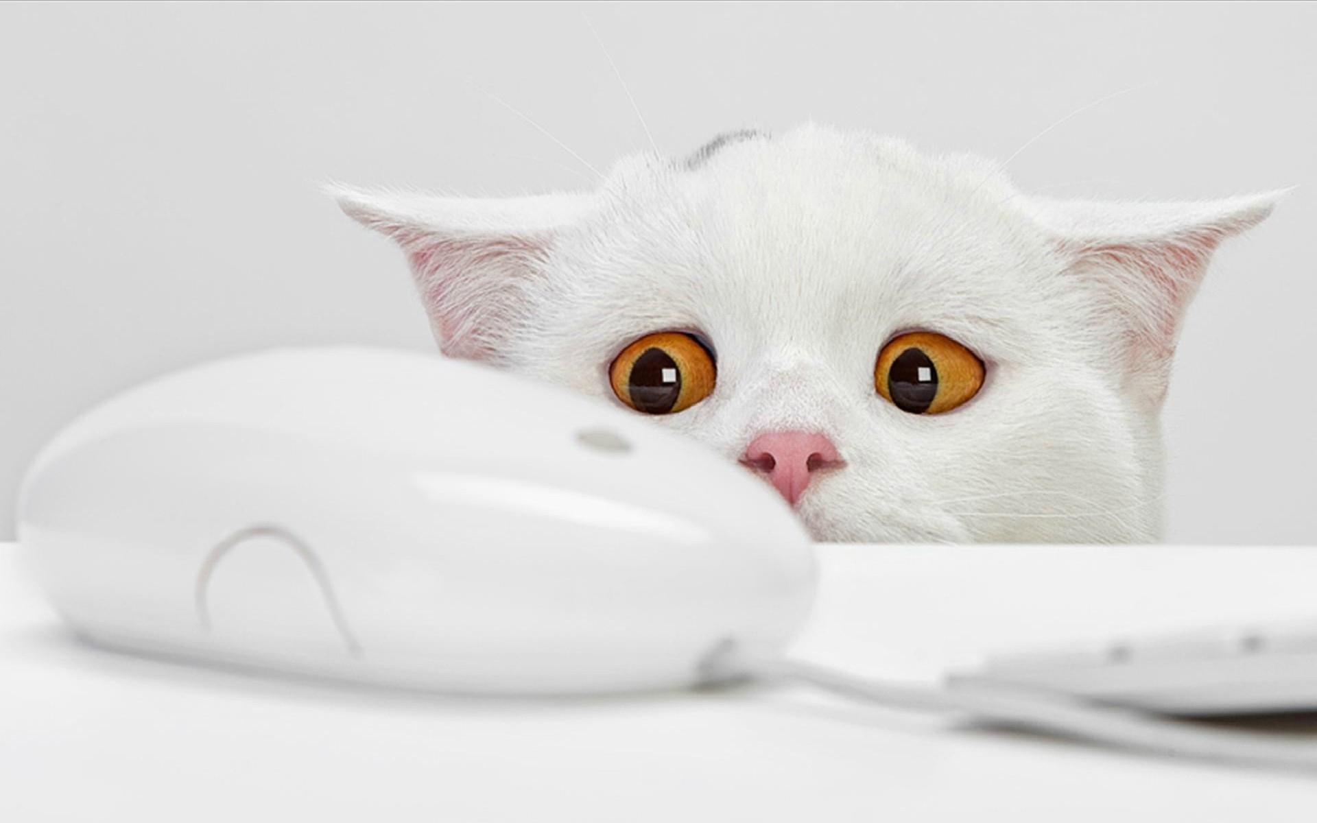 Handy-Wallpaper Humor, Tiere, Katzen kostenlos herunterladen.