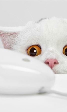 25207 download wallpaper Funny, Animals, Cats screensavers and pictures for free