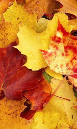 21835 скачать обои Растения, Осень, Листья - заставки и картинки бесплатно