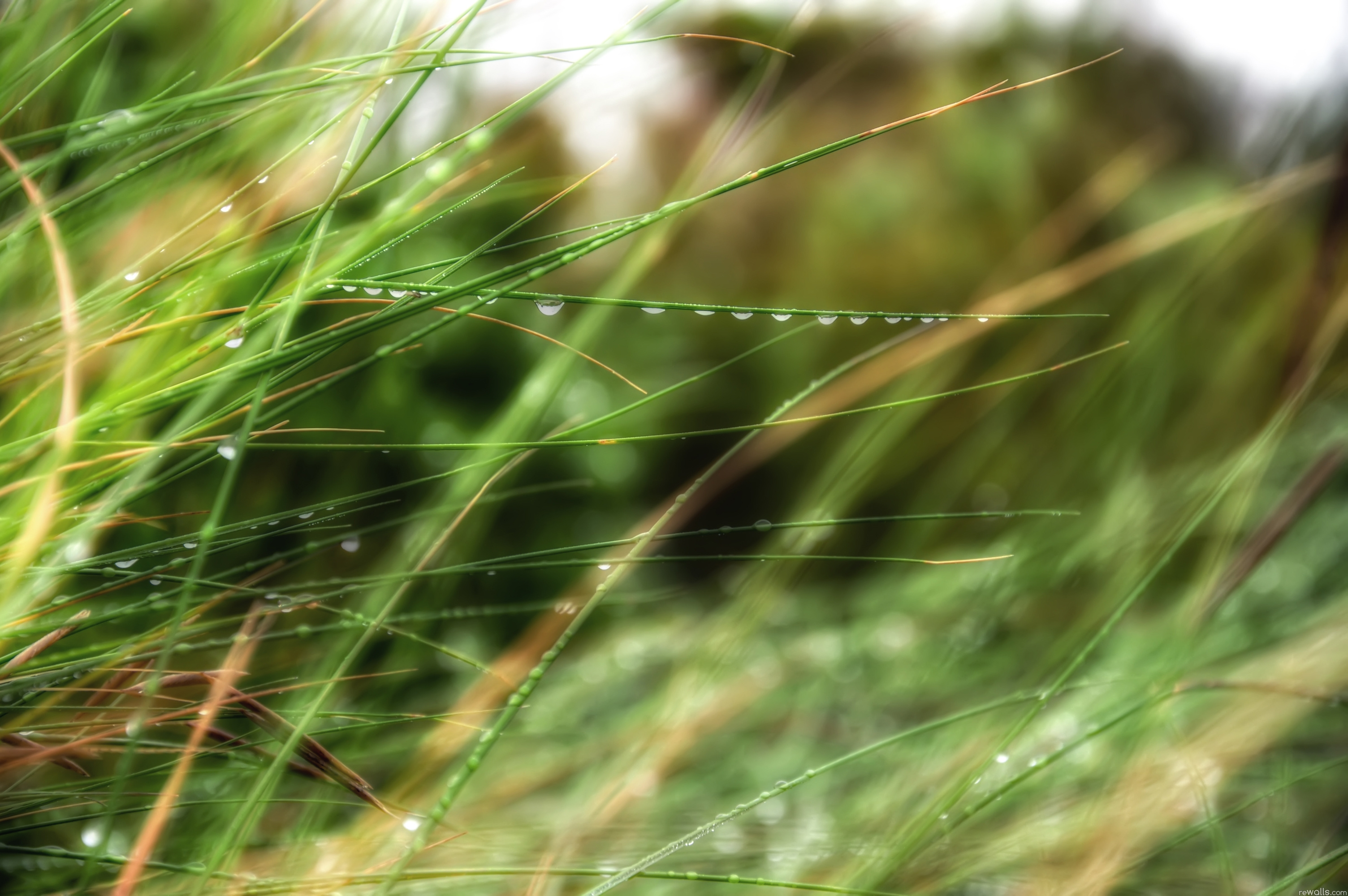 127015 download wallpaper Macro, Drops, Grass, Dew, Summer, Rain screensavers and pictures for free