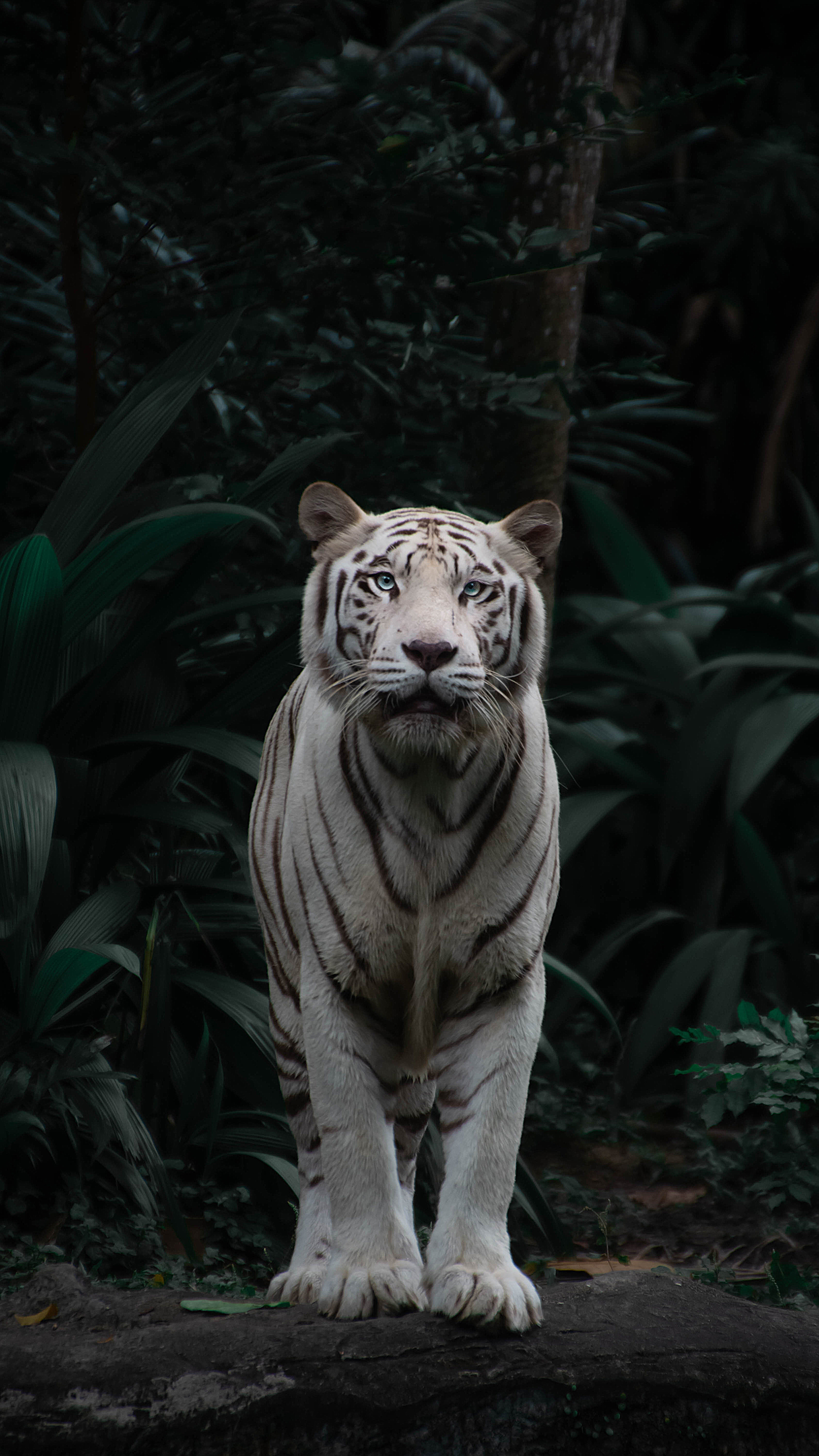 154547 download wallpaper Animals, Bengal Tiger, Tiger, Big Cat, Predator, Sight, Opinion, Bush screensavers and pictures for free