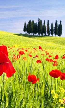 47160 baixar papel de parede Plantas, Paisagem, Campos - protetores de tela e imagens gratuitamente