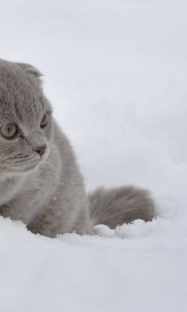 150212 download wallpaper Animals, Cat, Snow, Stroll, Fright screensavers and pictures for free