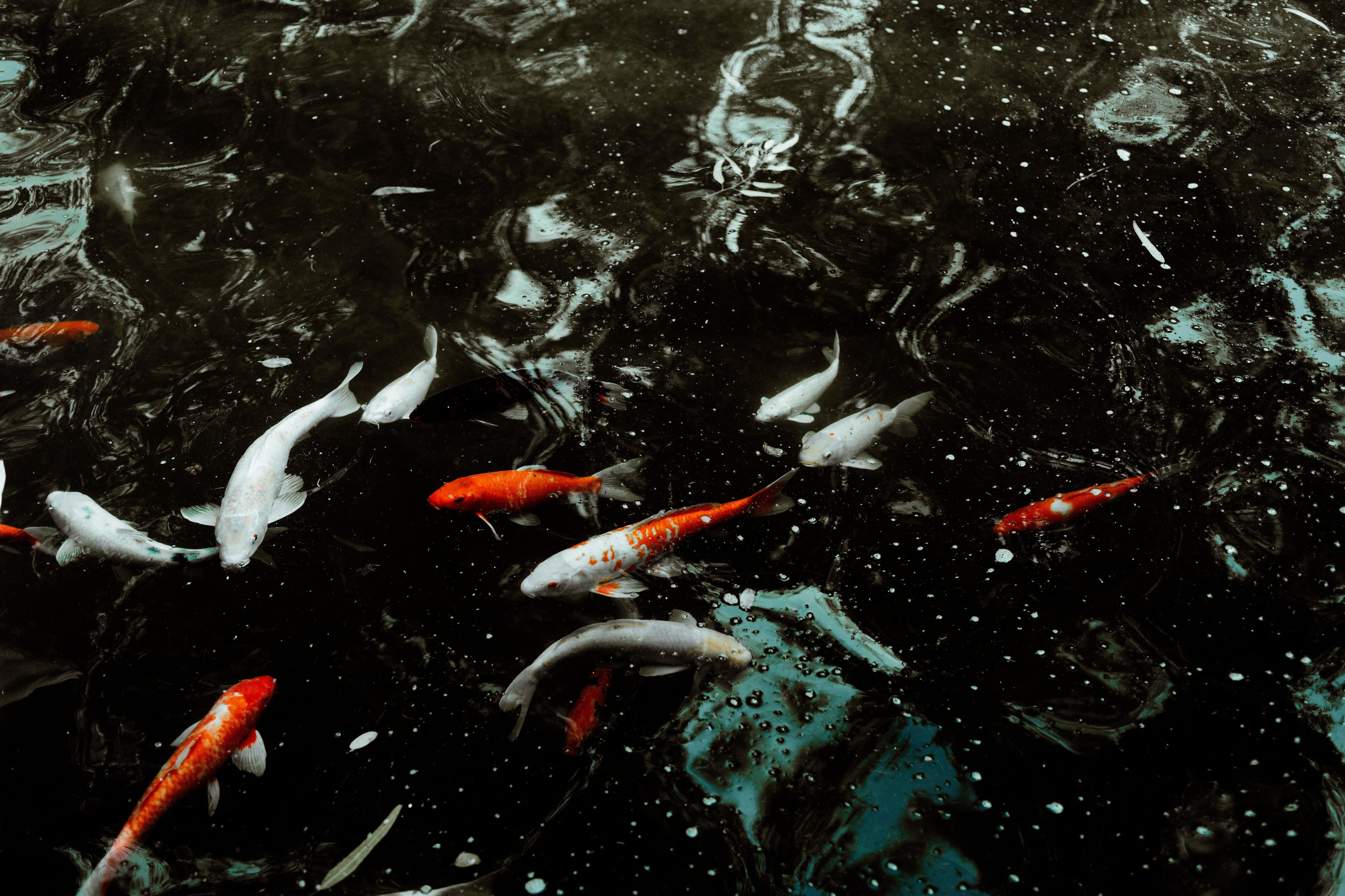 67443 download wallpaper Animals, Water, Fishes, Swimming screensavers and pictures for free