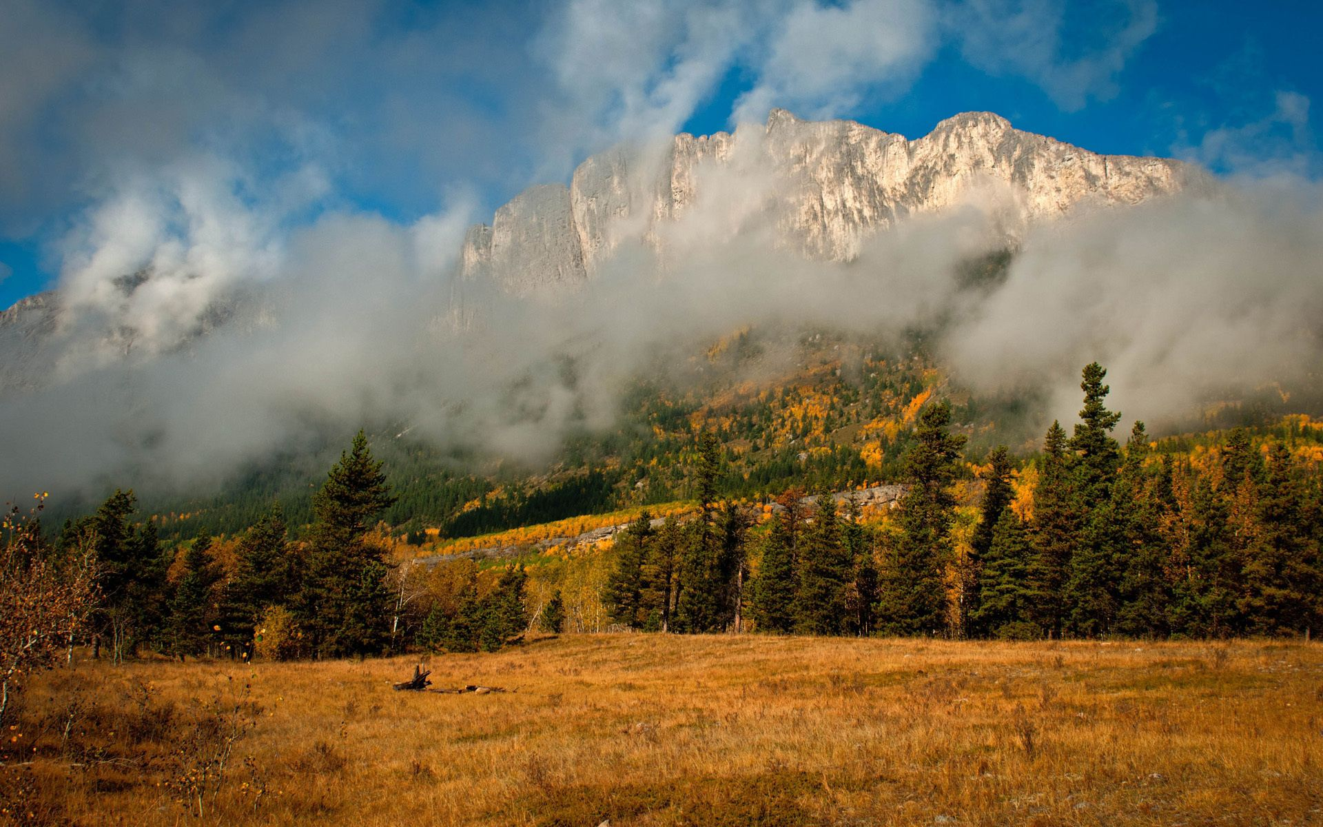 143493 Screensavers and Wallpapers Spruce for phone. Download Nature, Trees, Mountains, Autumn, Clouds, Fog, Spruce, Fir pictures for free