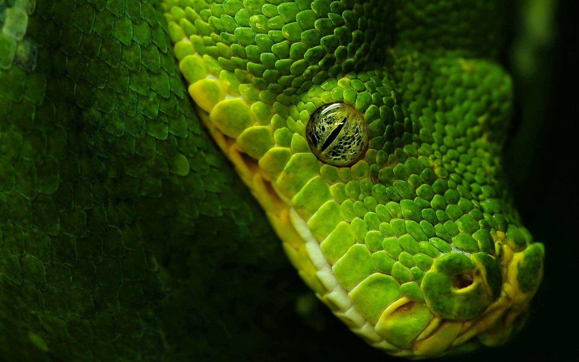 94163 Screensavers and Wallpapers Snake for phone. Download Animals, Snake, Scales, Scale, Eye pictures for free
