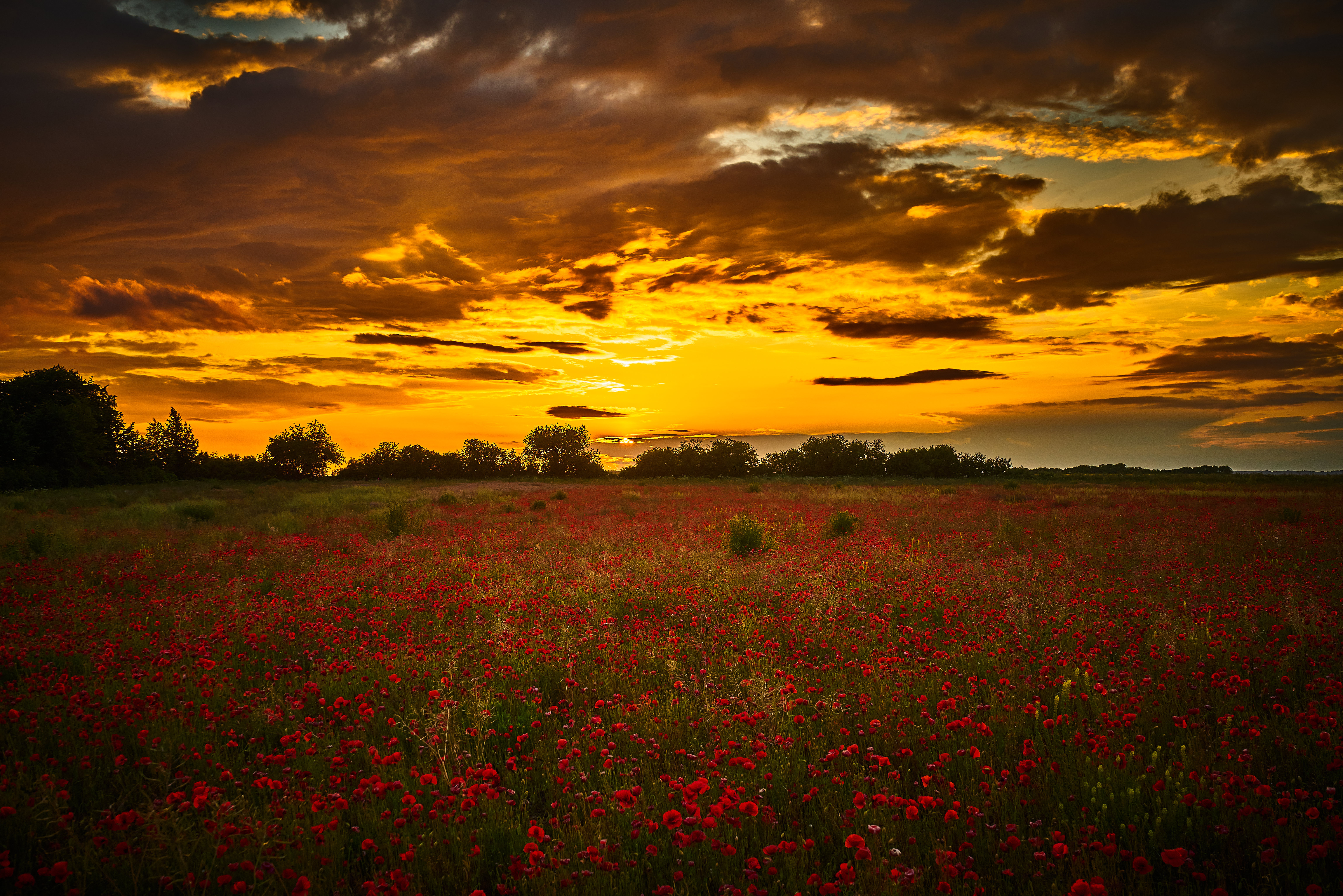 81634 Screensavers and Wallpapers Poppies for phone. Download Flowers, Sunset, Poppies, Wildflowers pictures for free